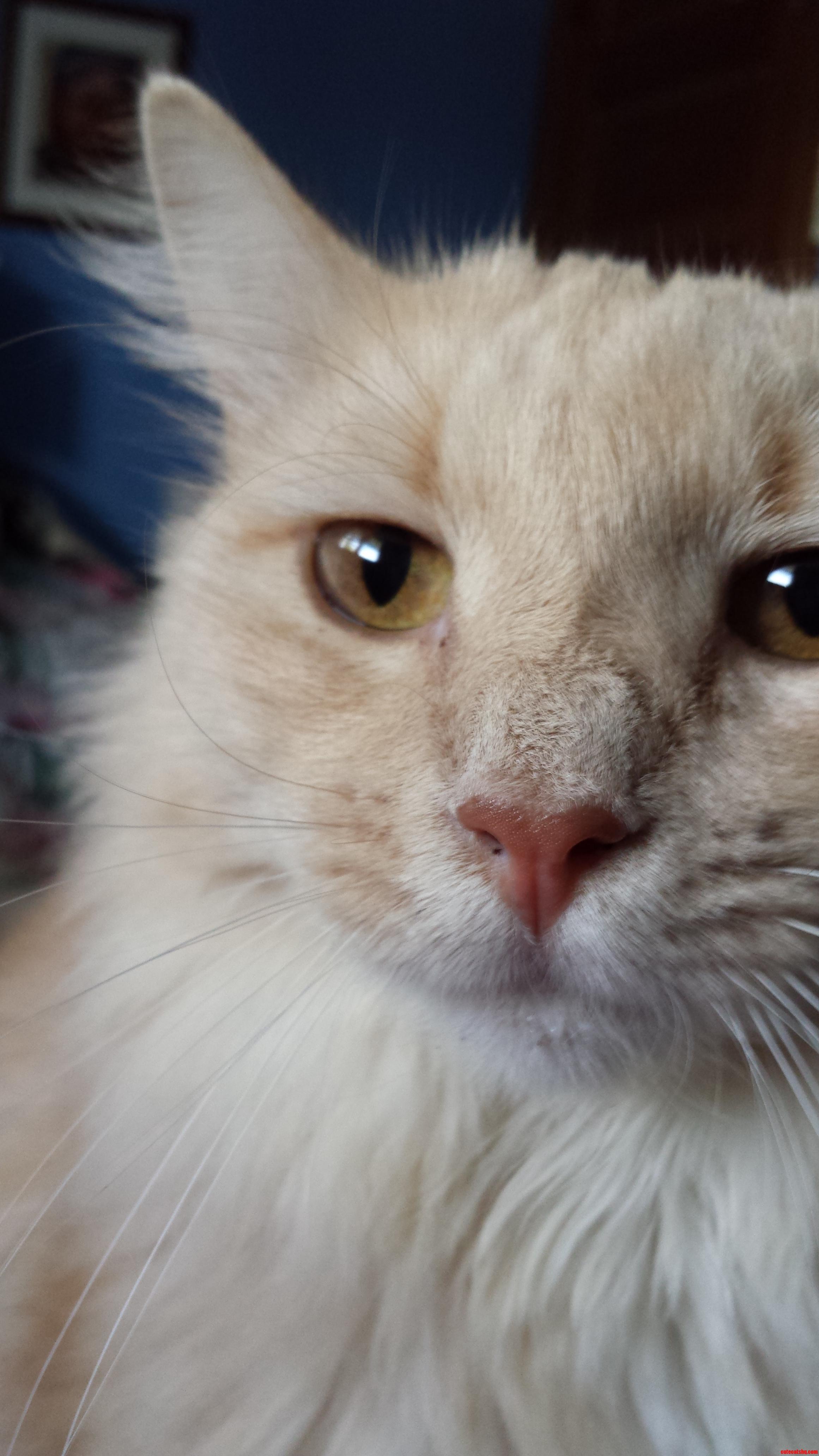 Meet My Beautiful Kitty Hiko