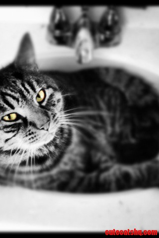 Meet Vegas… The Most Loving Cat We Ve Ever Had.