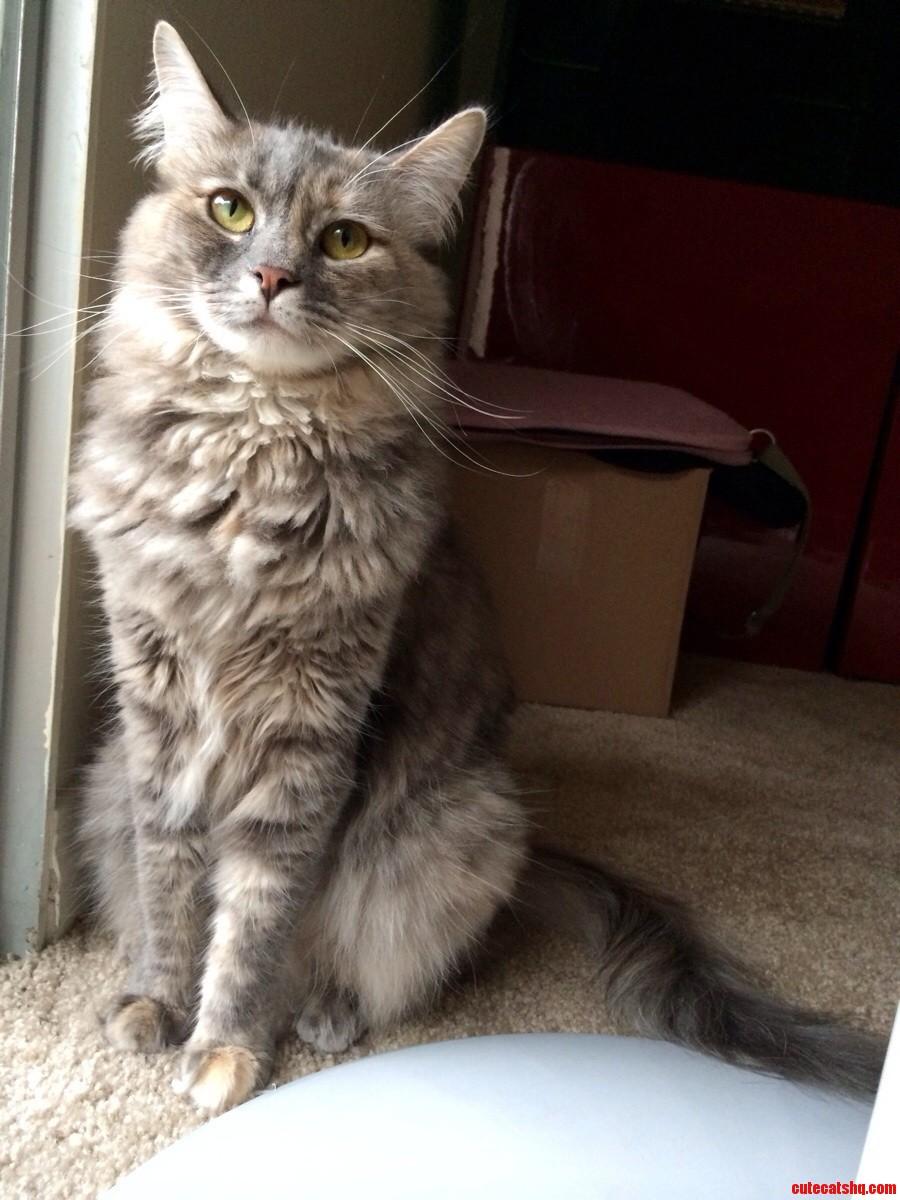 My Beautiful Cat Figgy.