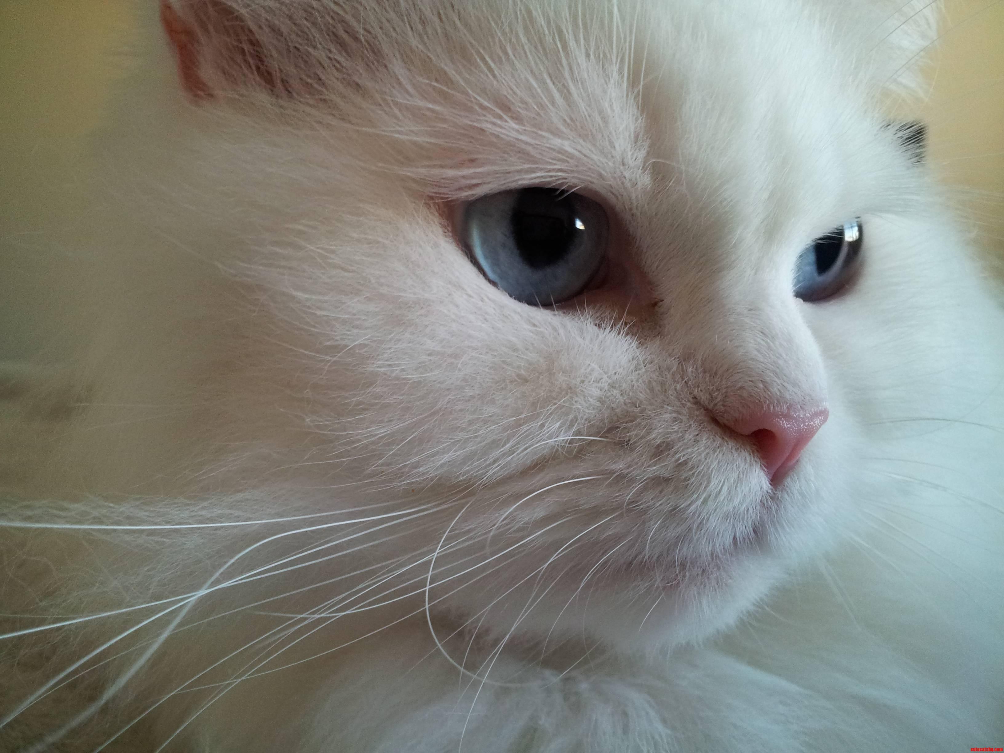 My Beautiful Girl Arabella. Just Look At Those Eyes