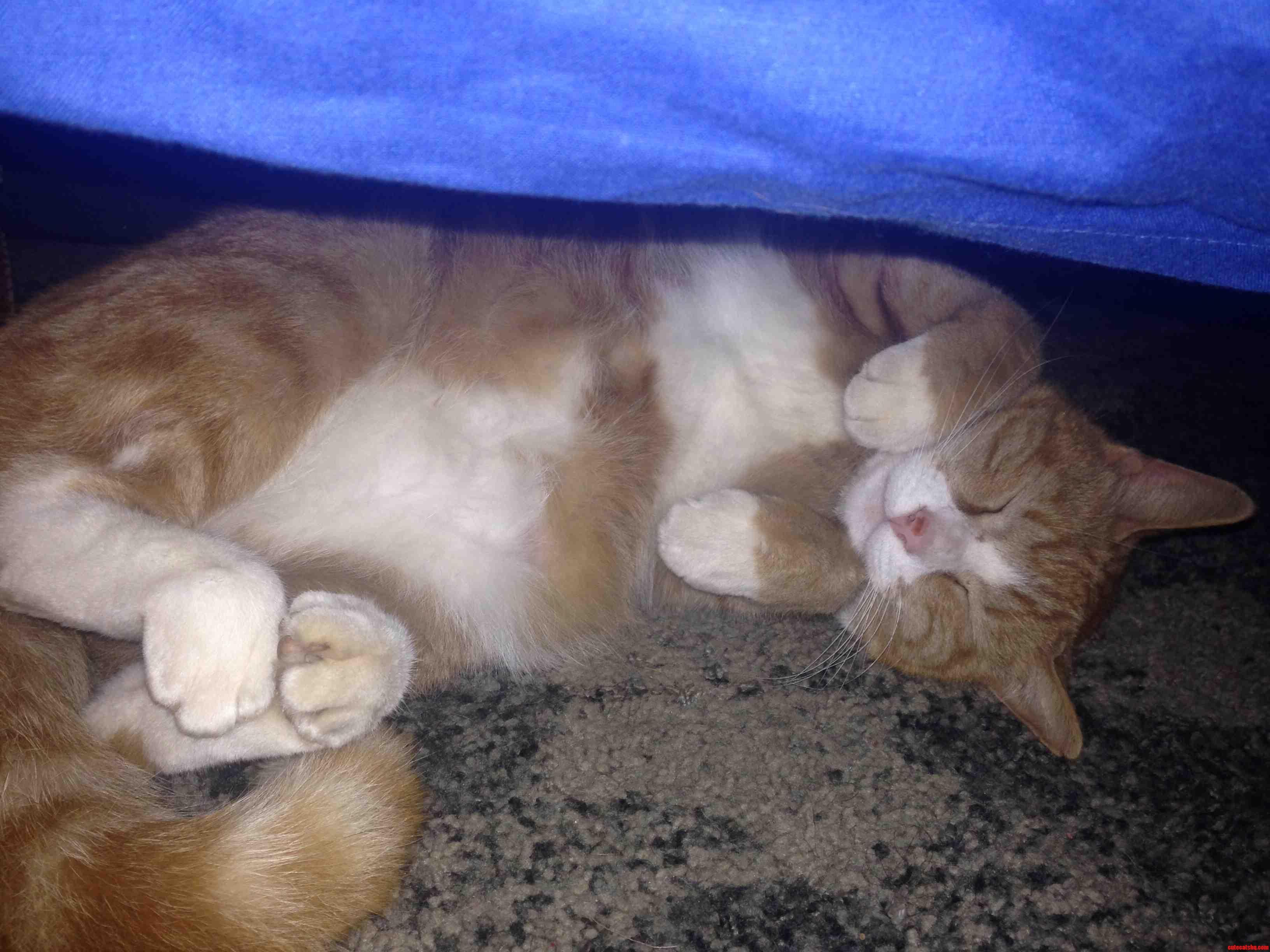 My Big Boy Oliver Taking A Nap -