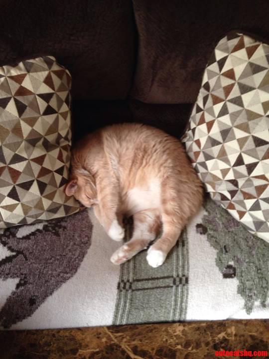 My Cat Rocky Is A 20 Lbs. Manx