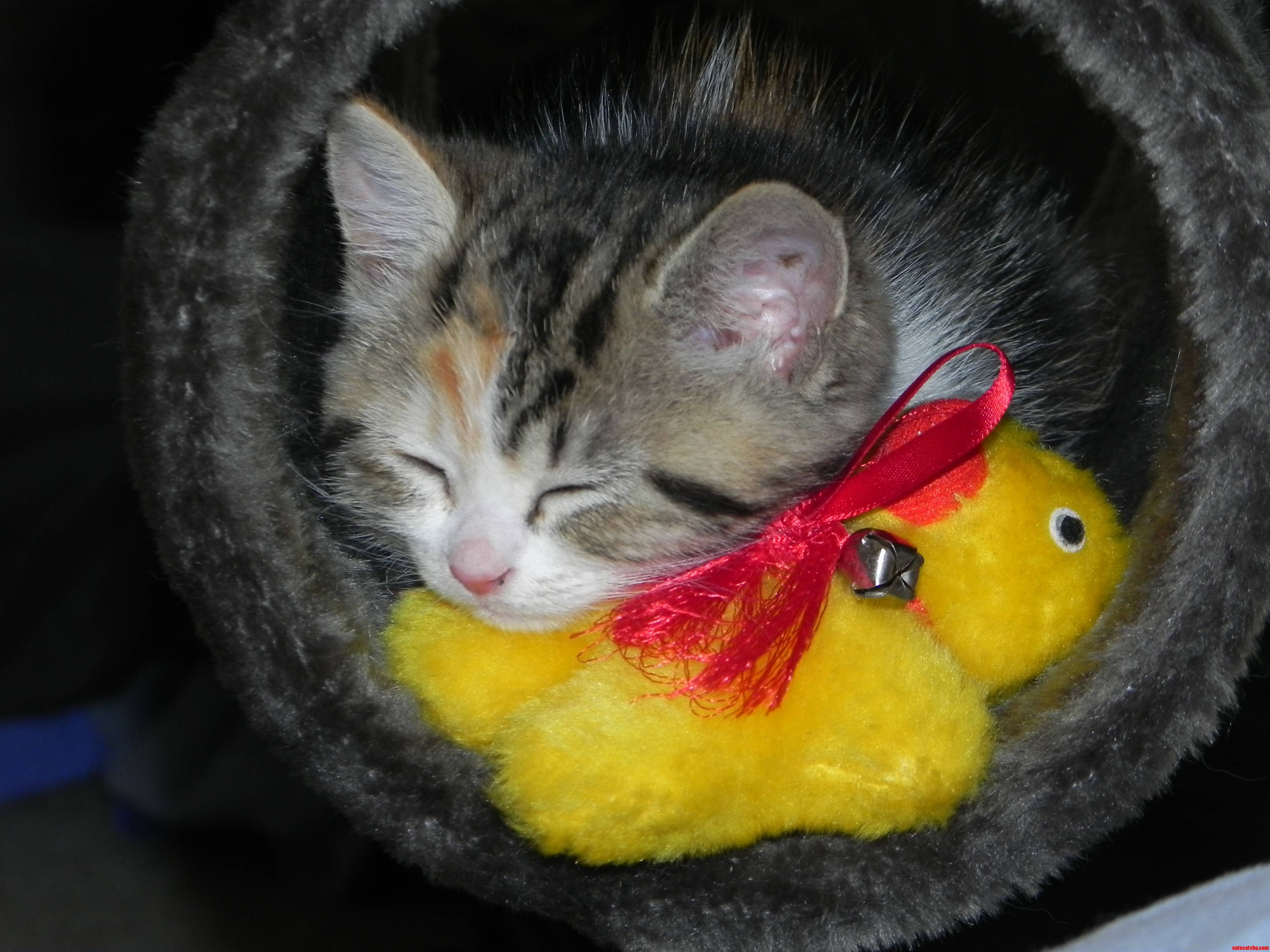 My Kitten Matisse Loves Her Ducky