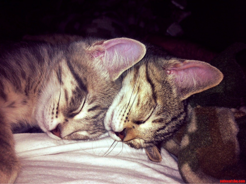 Sisters Napping