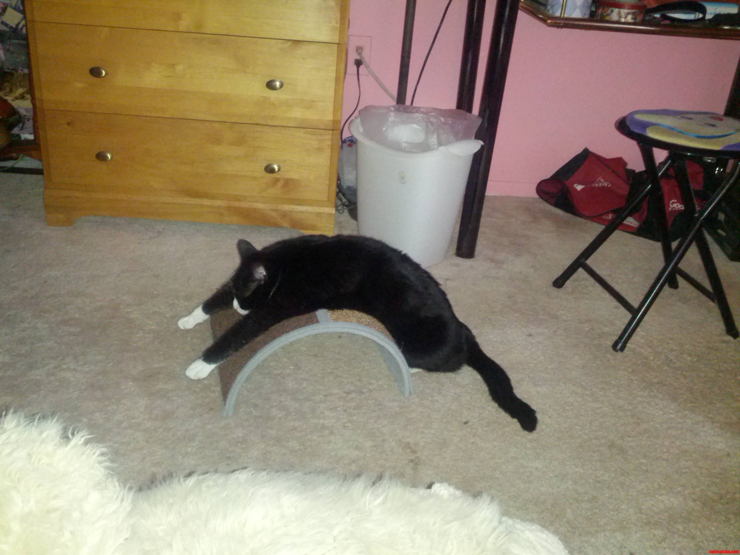 So I Bought My Cat A Scratching Post…