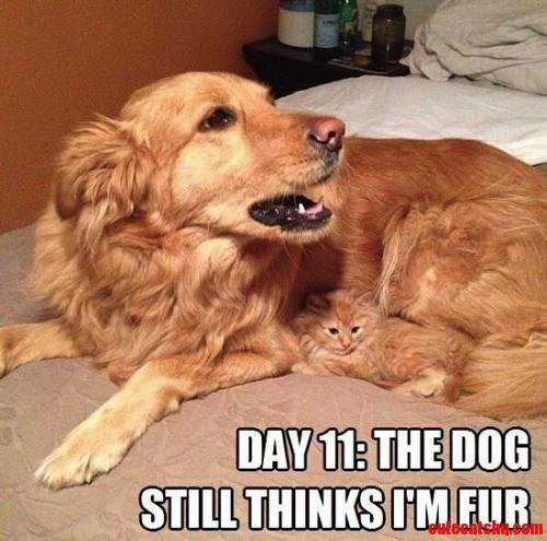 The Dog Still Thinks Im Fur.