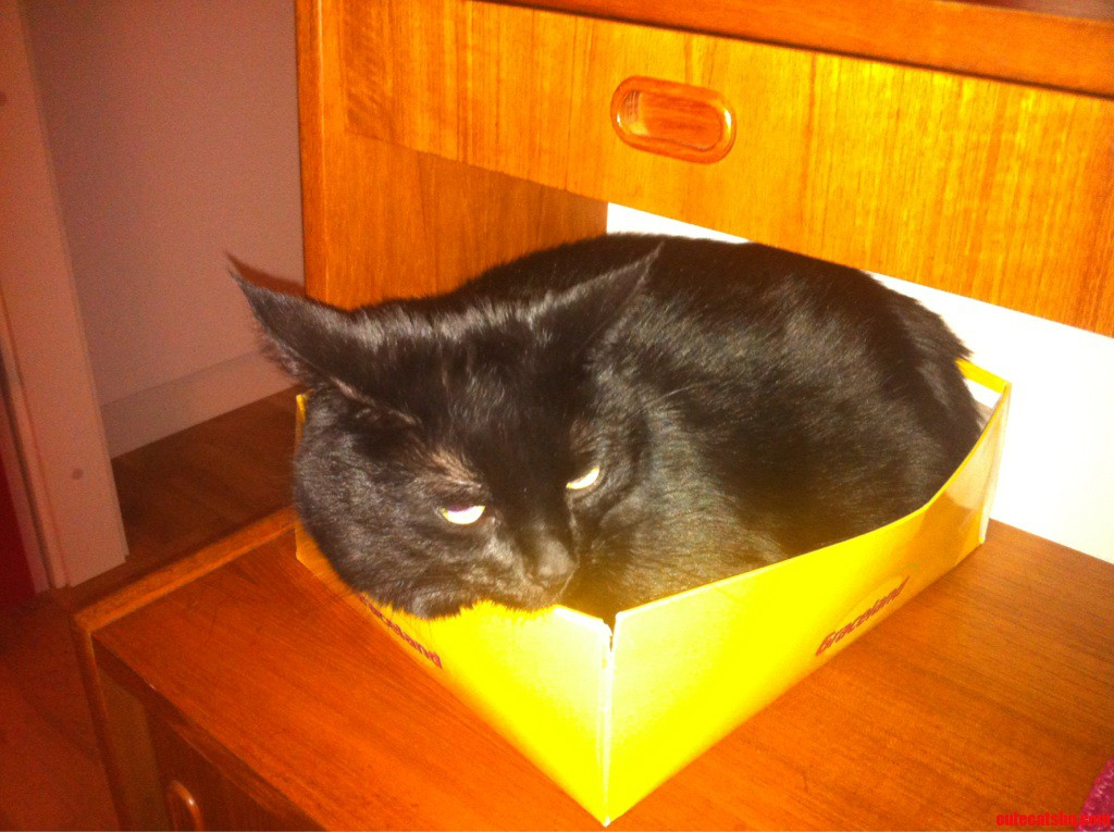 This Is My Box. There Are Many Like It But This One Is Mine.