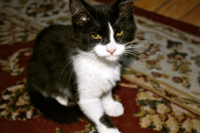 [Image: Vicious-Kitten-700x466.jpg]
