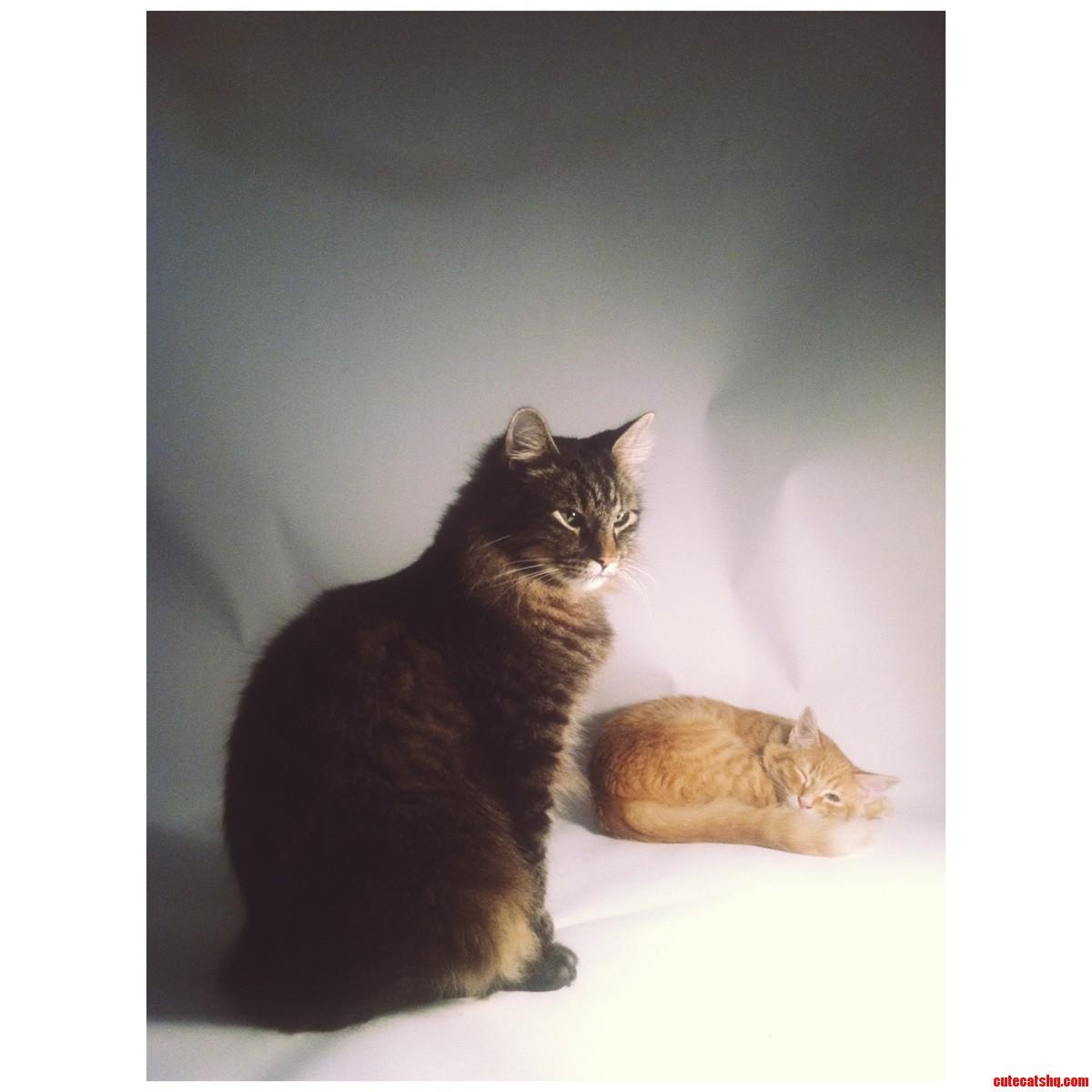 Wannabe Cat Models.