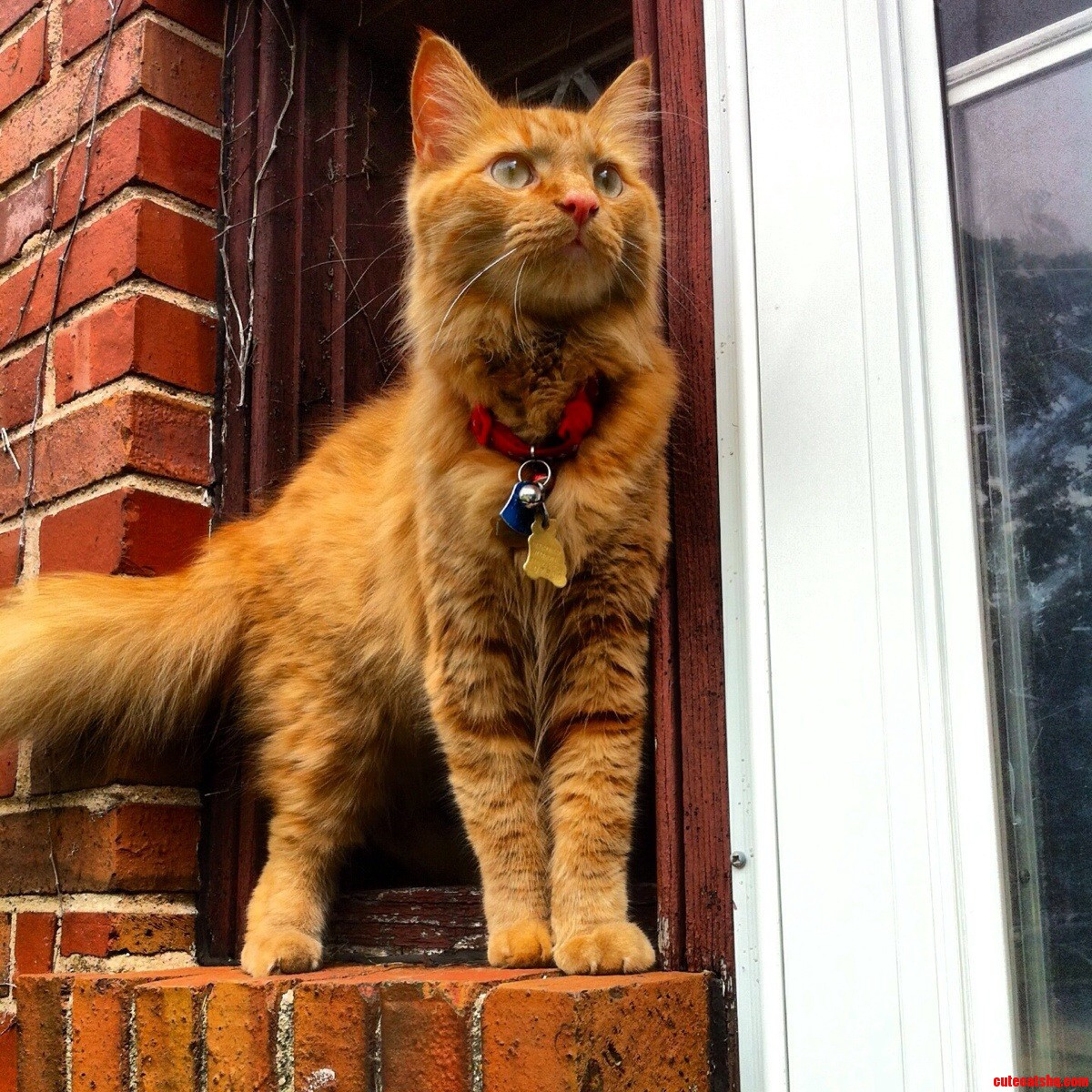 World Meet Luke A Majestic Kitty Cat With A Beautiful Soul Ginger With Soul .