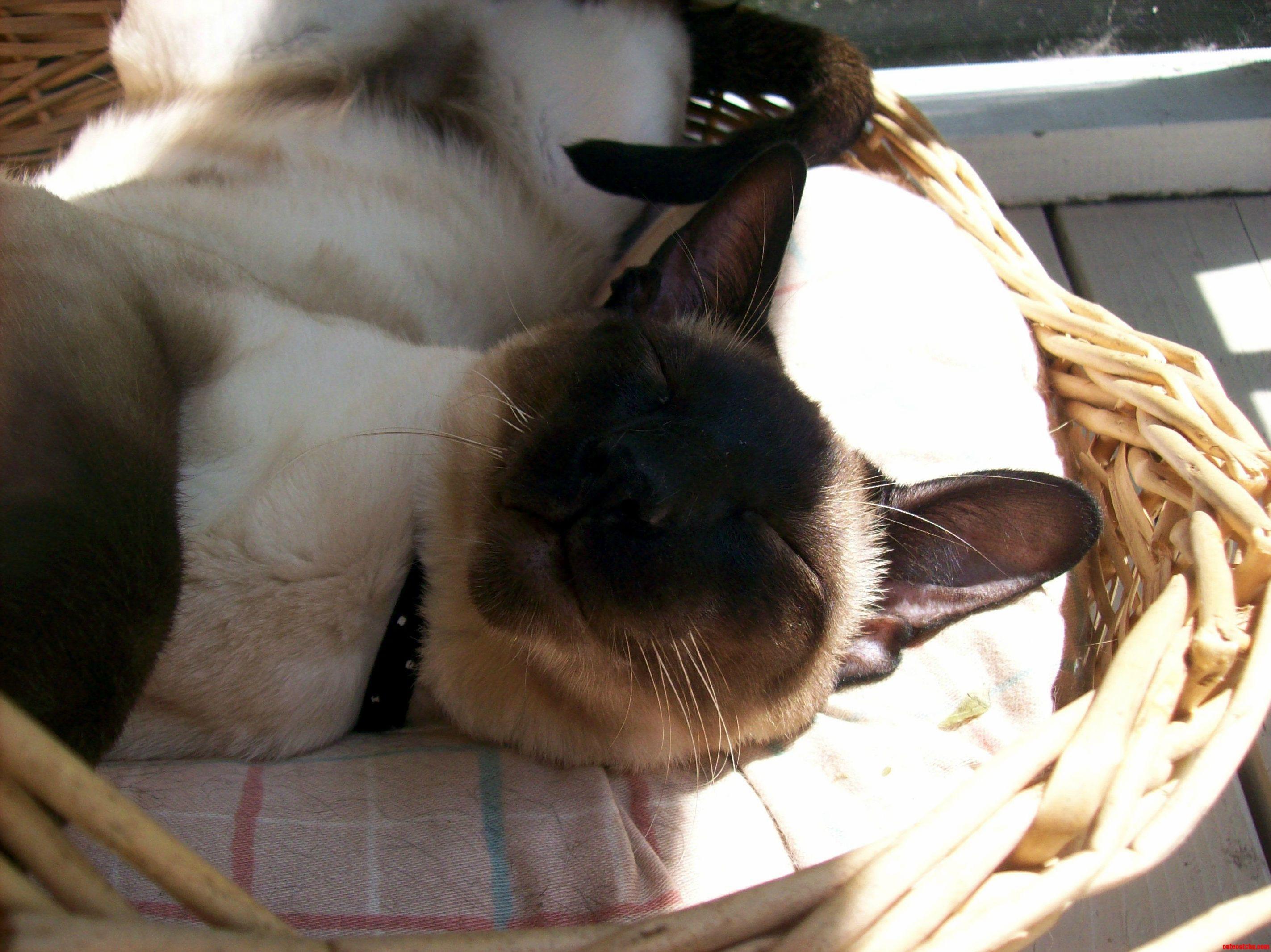 3 my kitty