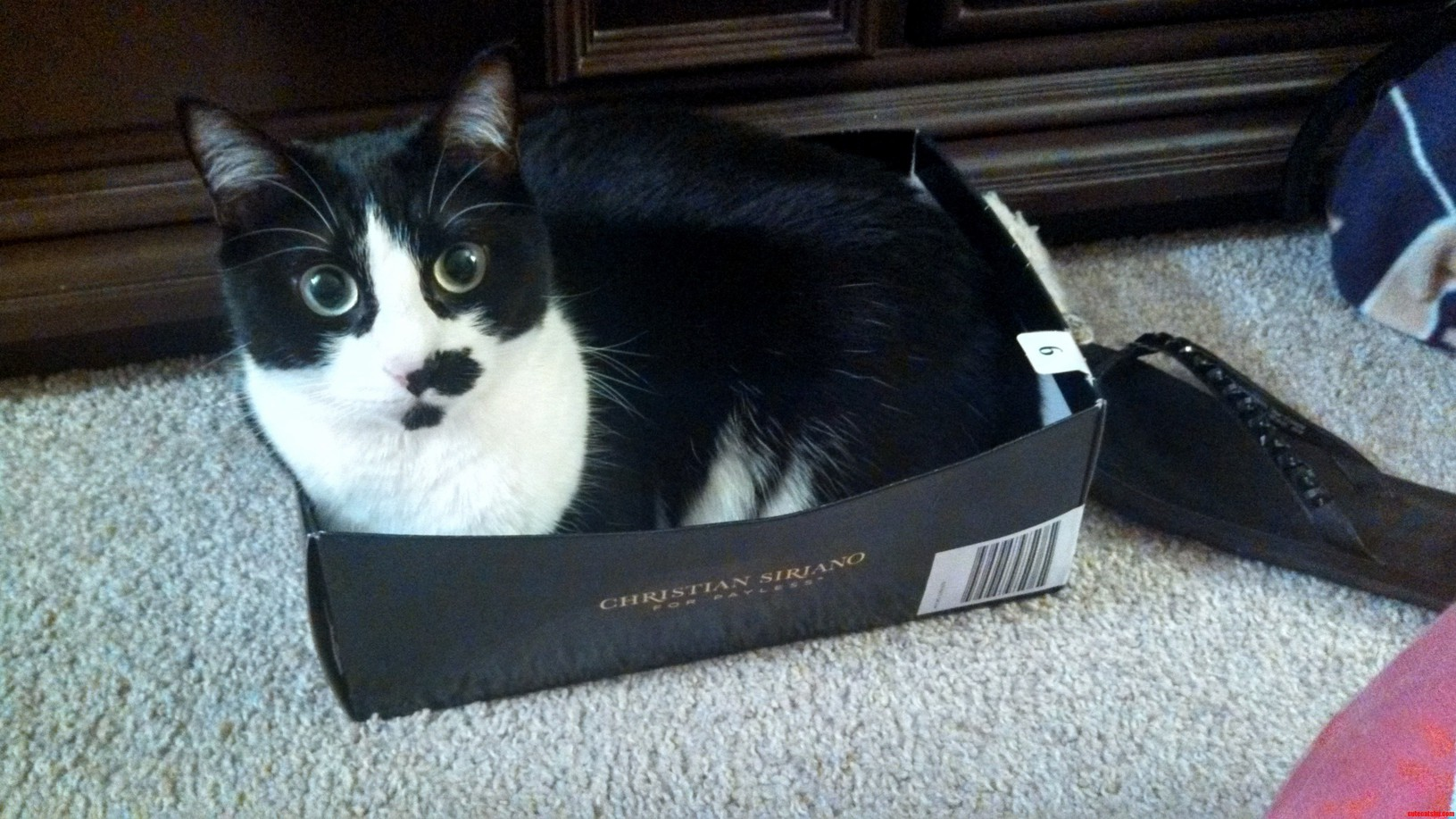 A Box Overflowing With Cuteness