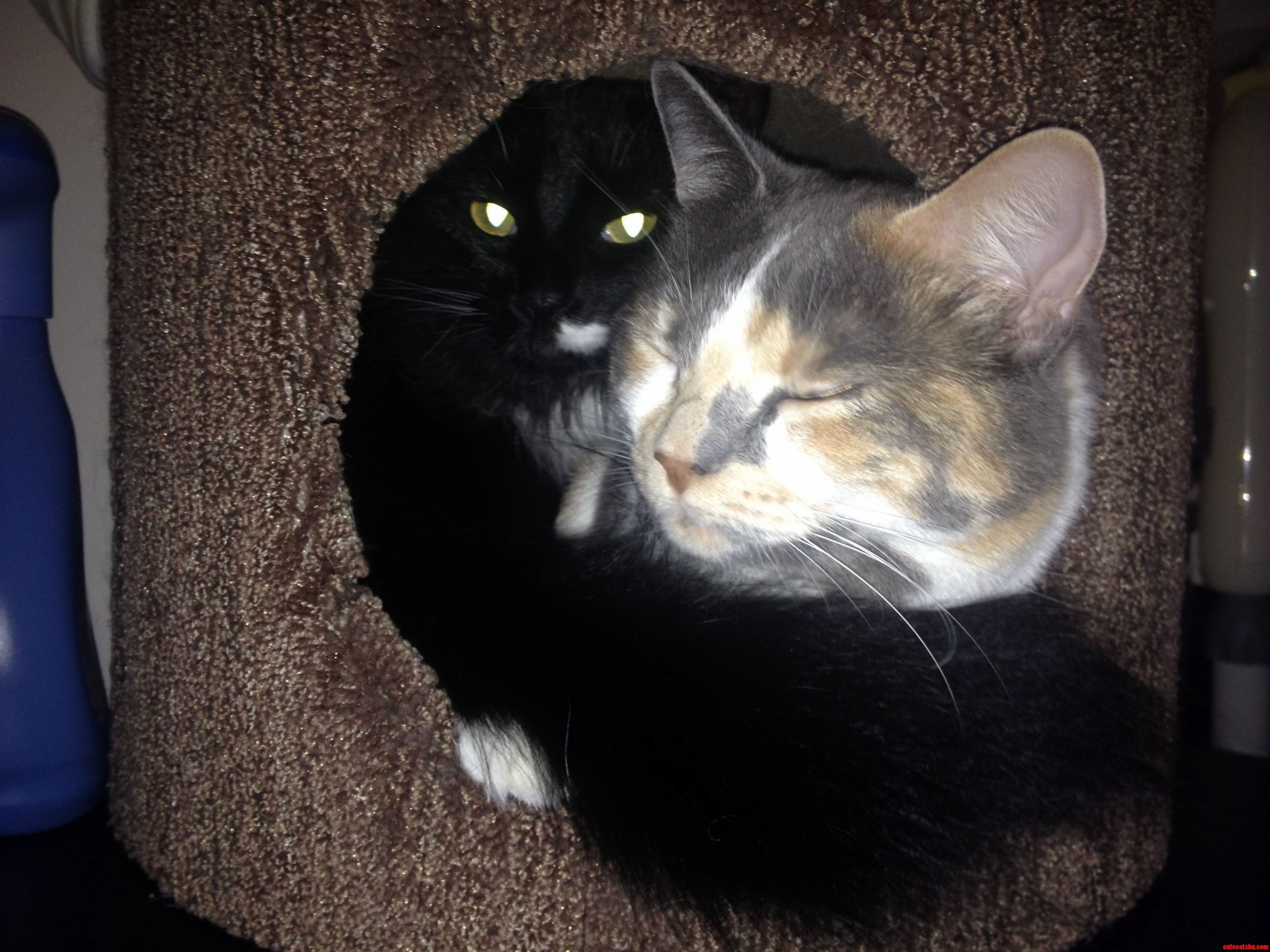 After Waiting Four Months For Our Two Cats To Cuddle Together Inside The Kitty Condo The Wait Is Over.