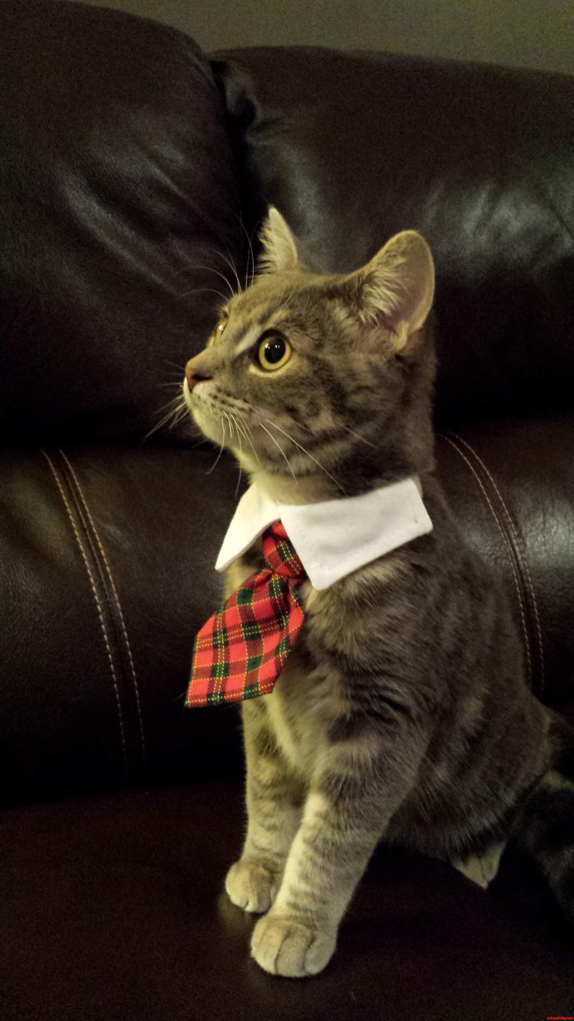 Archer Means Business…
