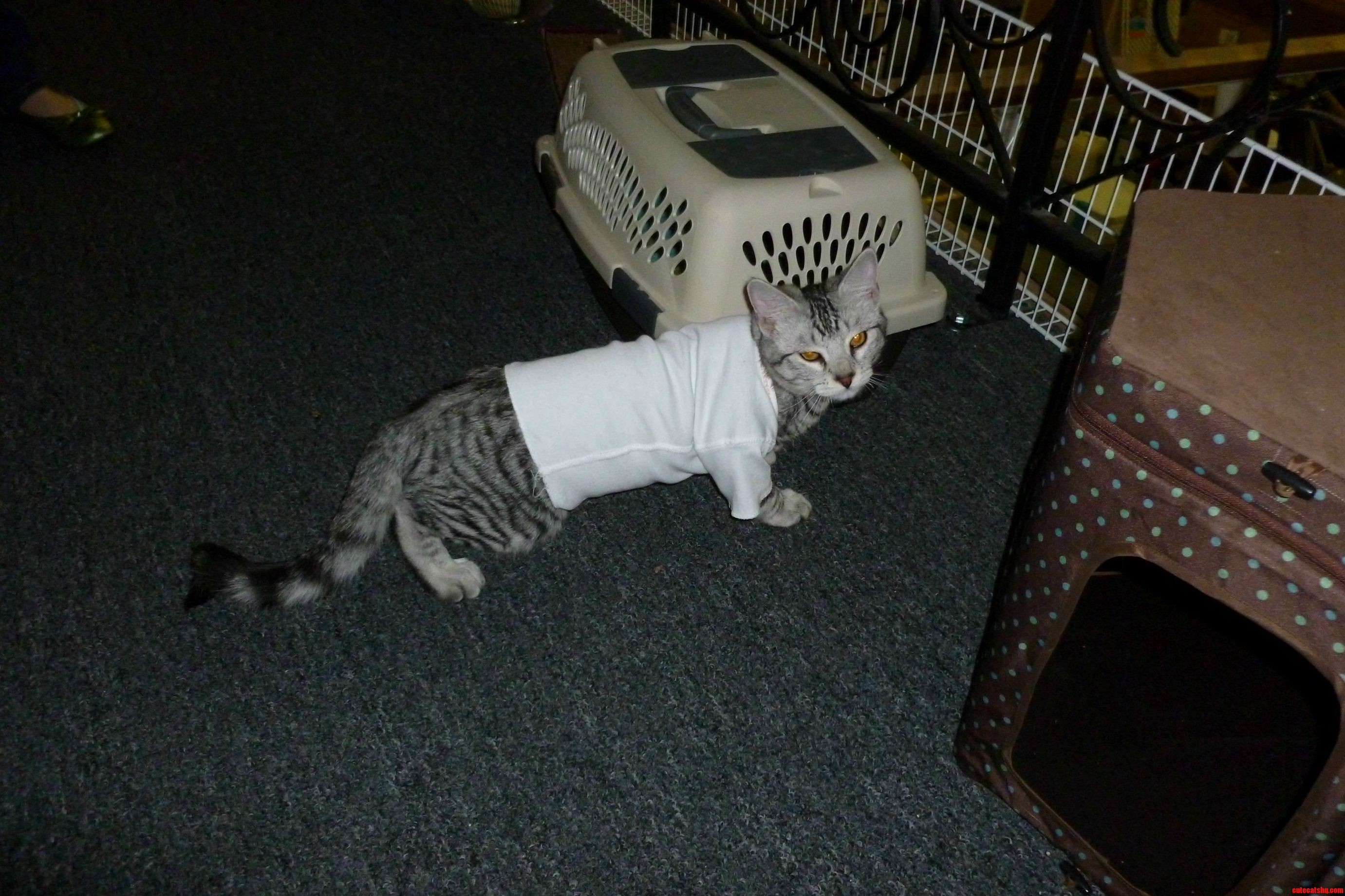 Baby Clothes Fit Cats A Little Too Well