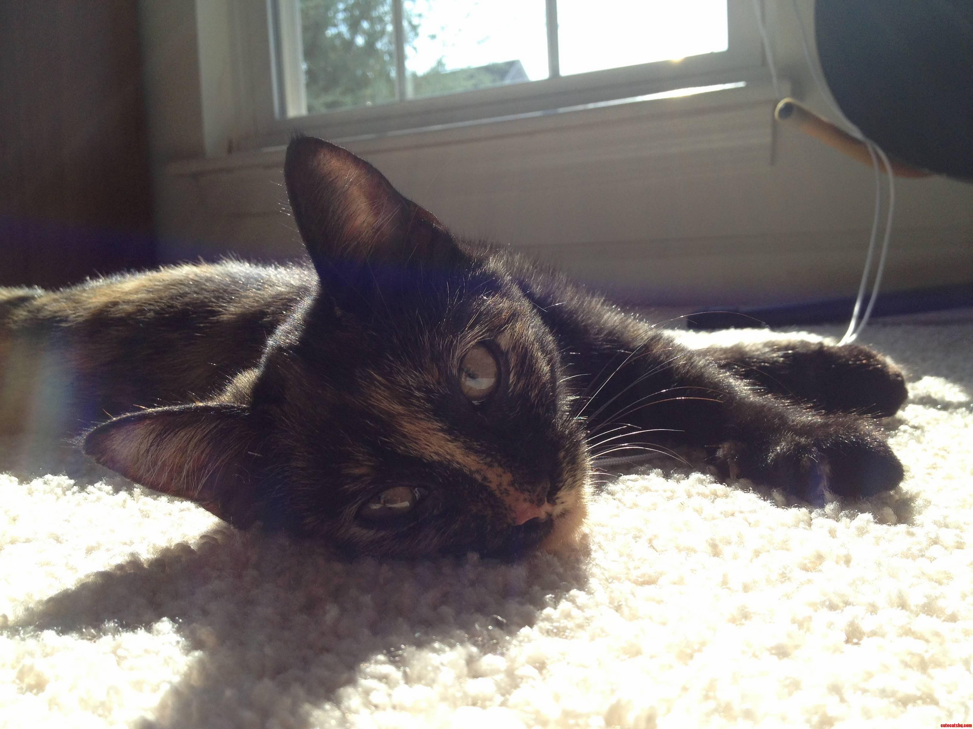 Benny The Sun Kitty