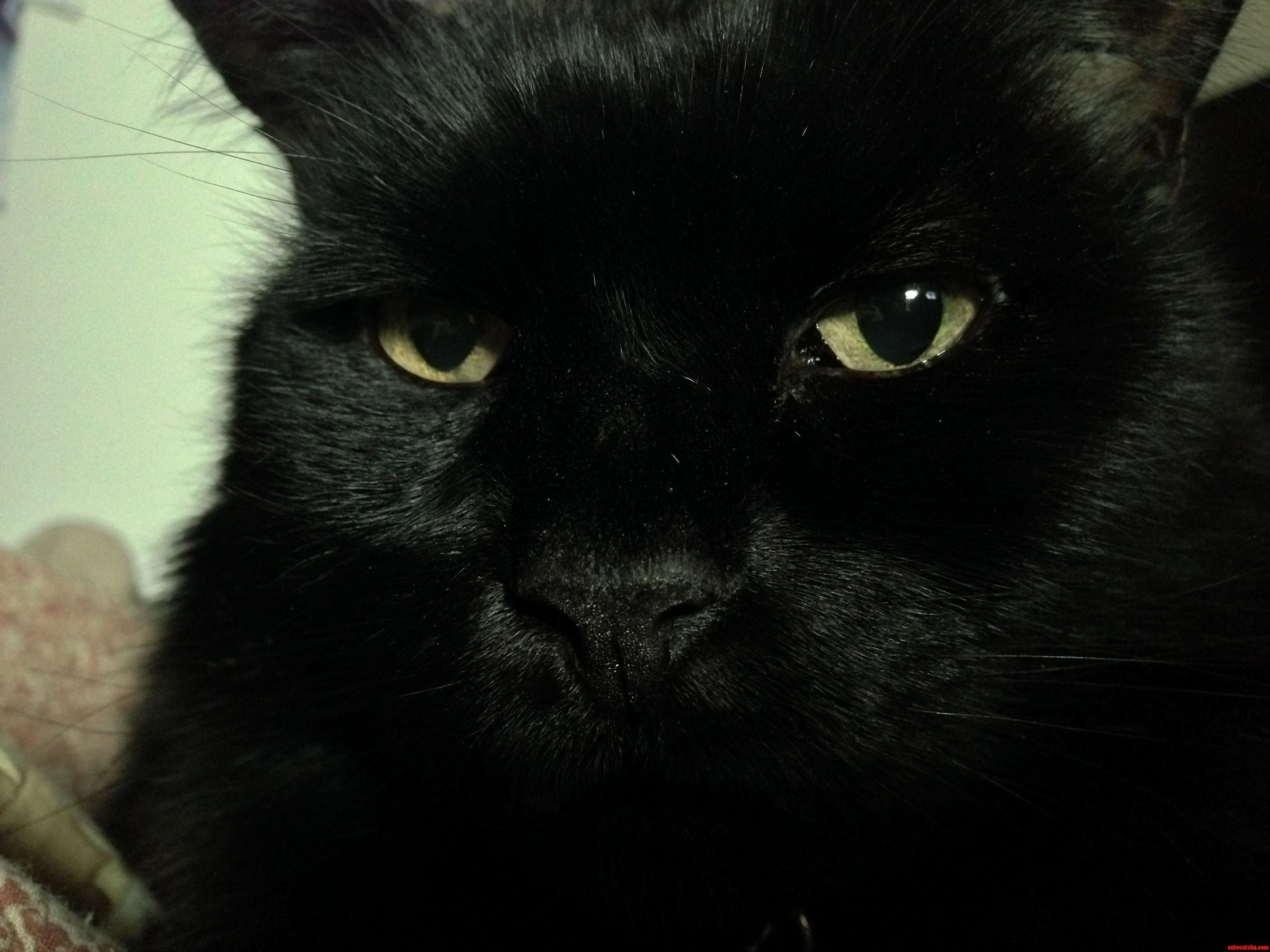Black Cats Are So Hard To Photograph. One Of The Few Good Pictures I Have Of My Cat Blacky