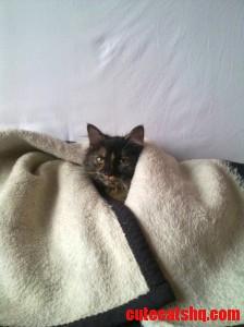 Blanket Cat Luna