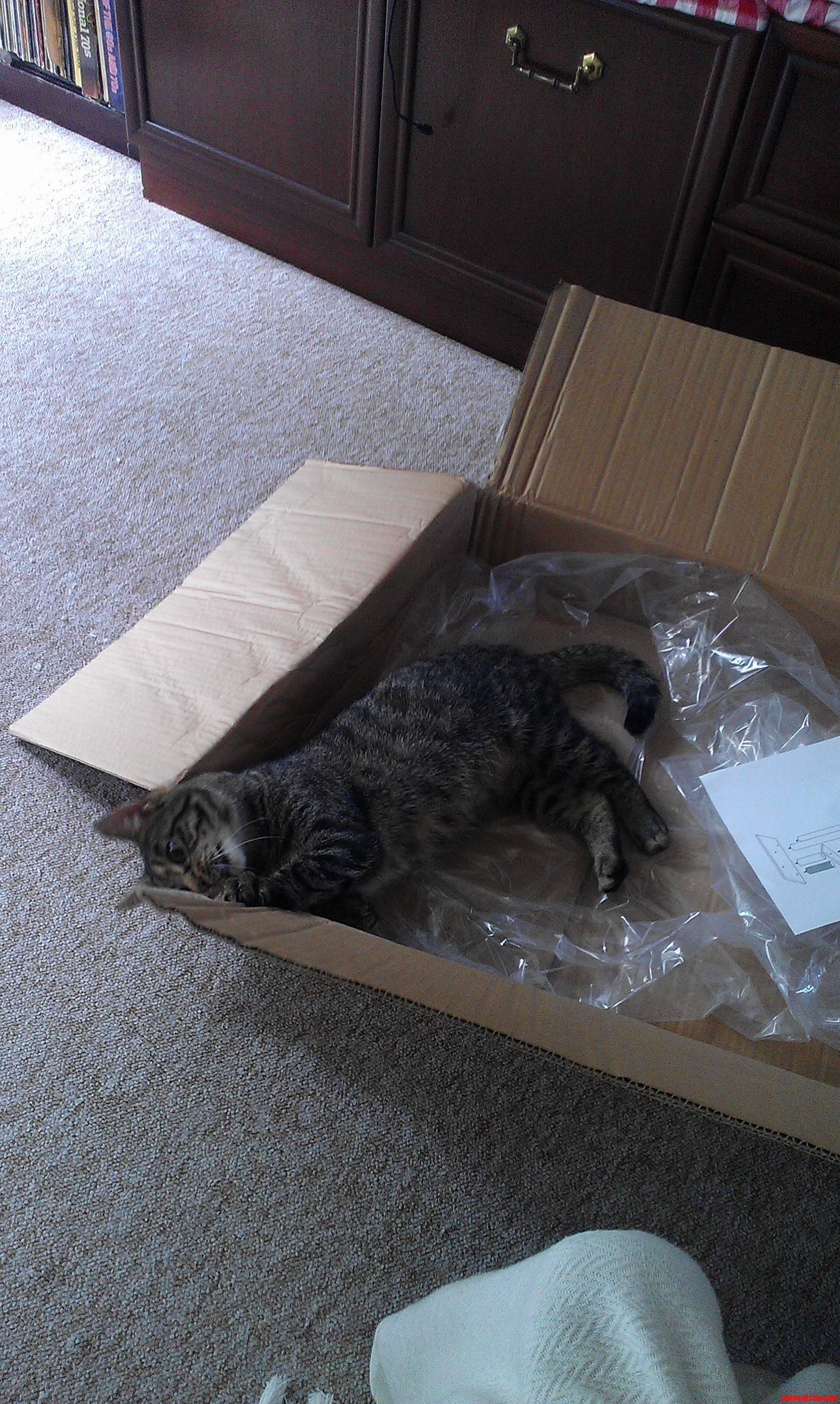 Bought My Kitty A New Activity Centre… Prefers Box