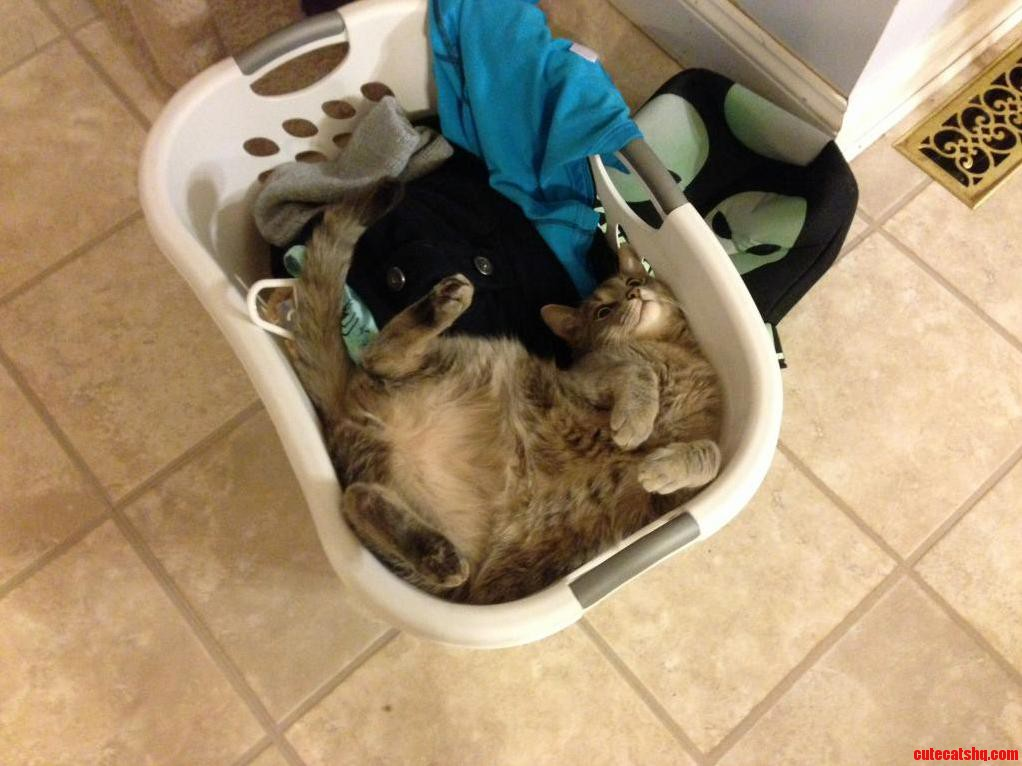 Bowser Likes Wash Baskets