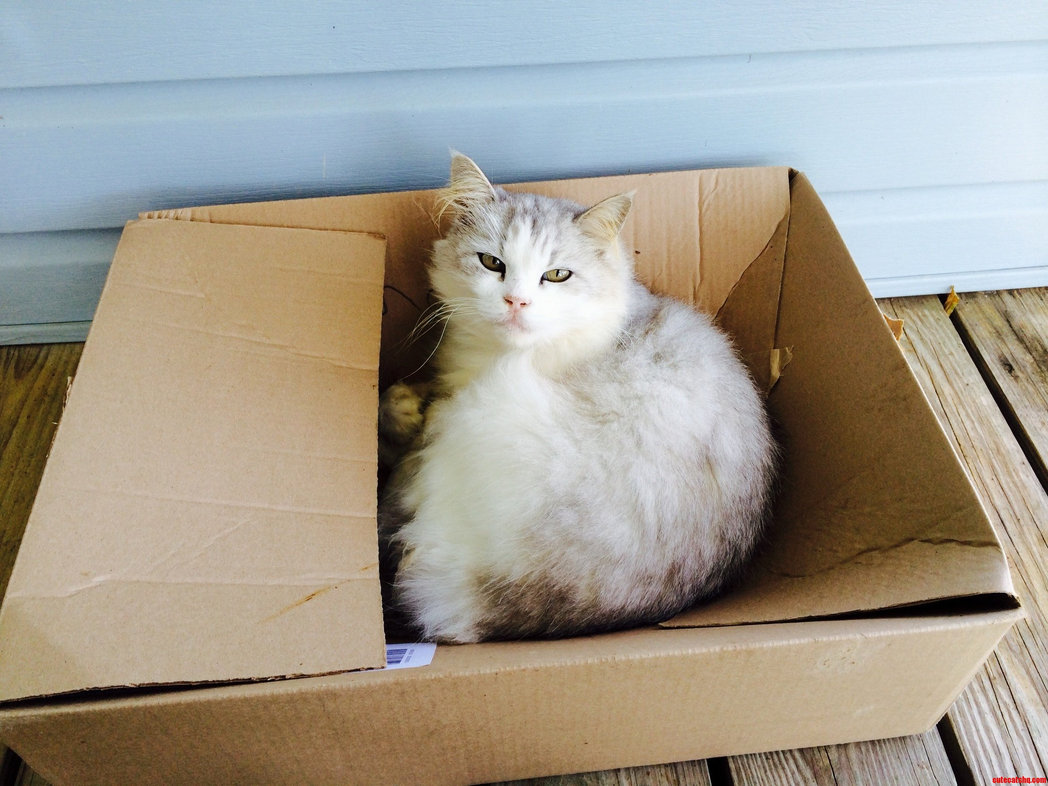 Boxes Never Get Old To A Cat…