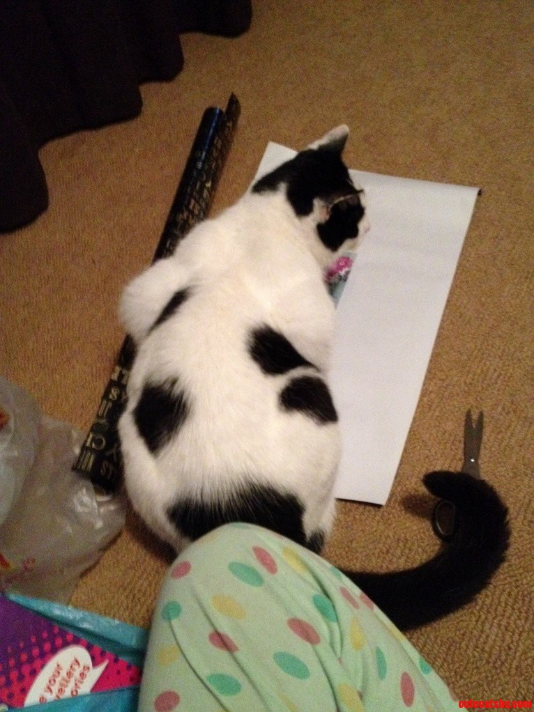 Buster Not At All Helping The Xmas Present Wrapping Process