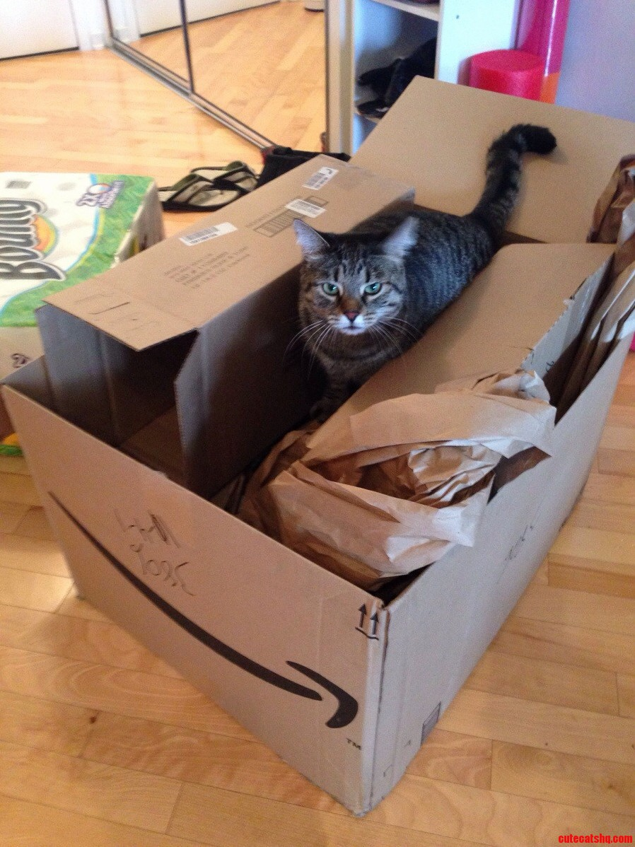 Cat Heaven Amazon Package Day