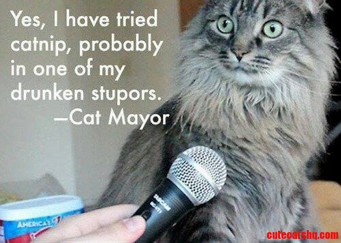 Cat Mayor