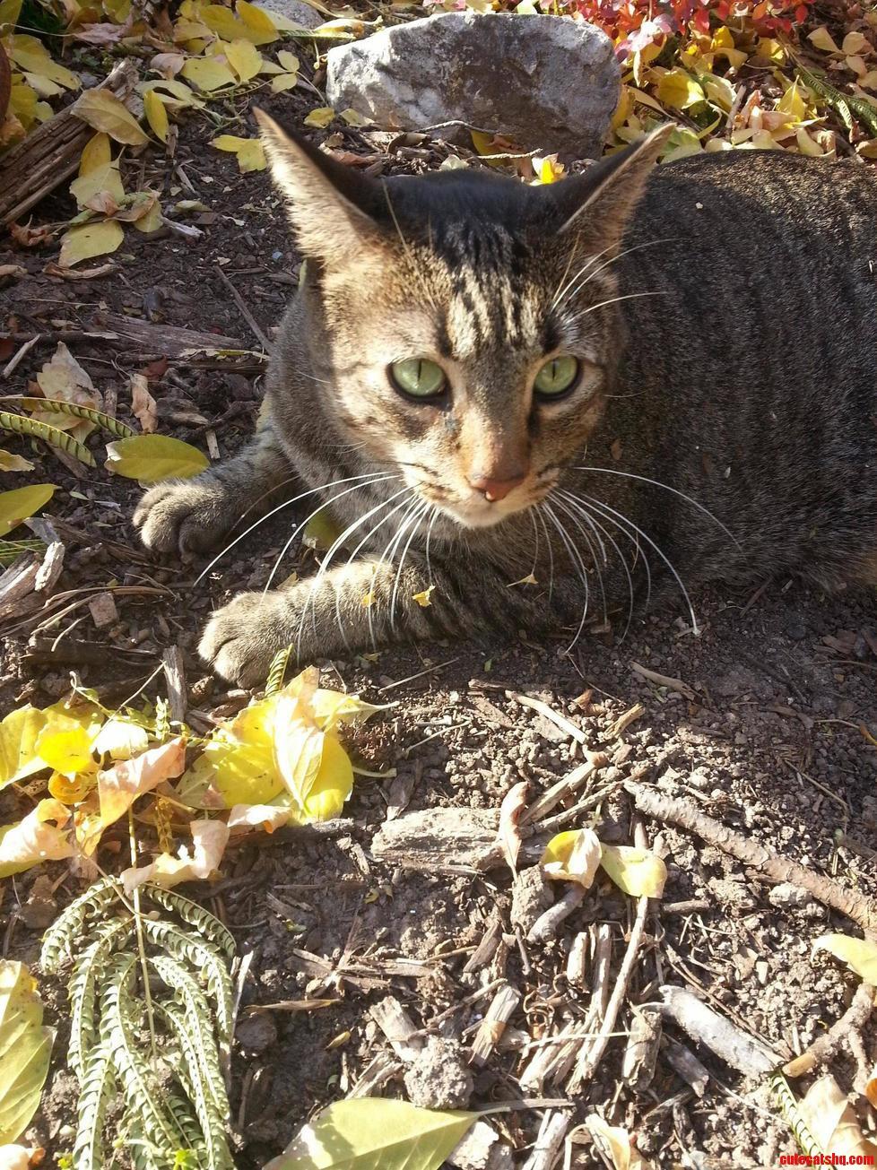 Catnips A Hell Of A Drug. Meet Foxtrot.