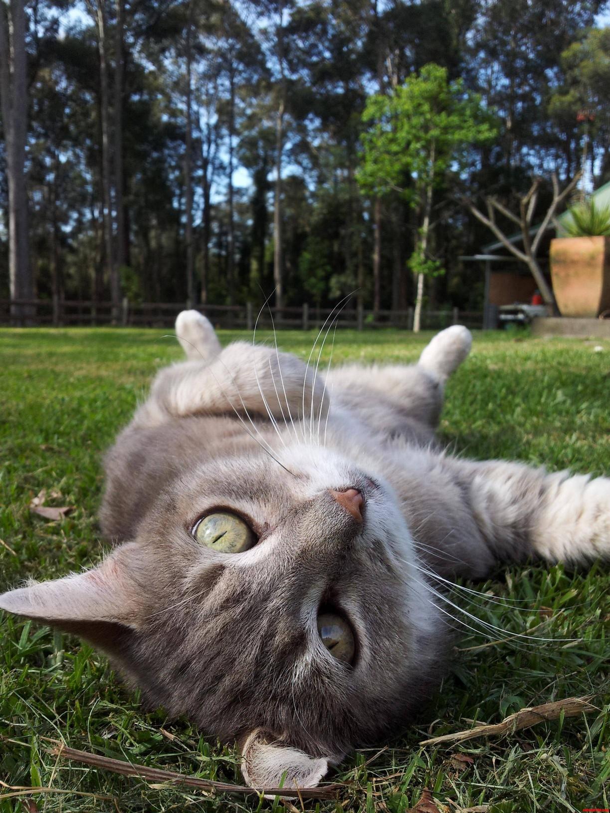 Charlie Enjoying The Outdoors