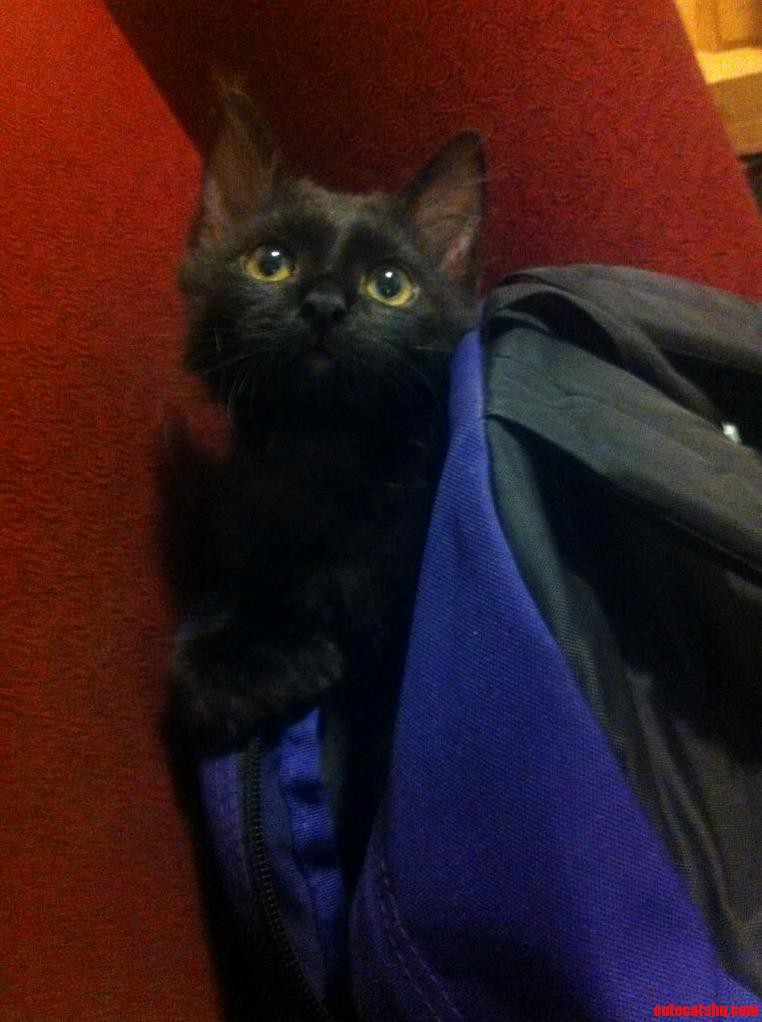 Chilling In My Backpack