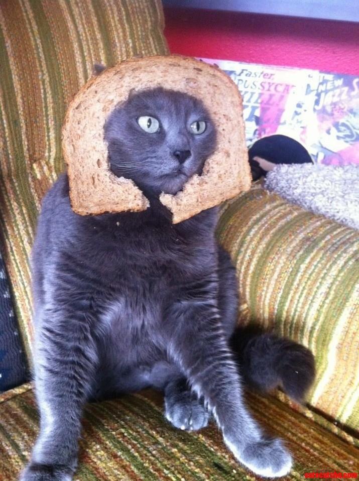 Daves Killer Bread Blues Bread