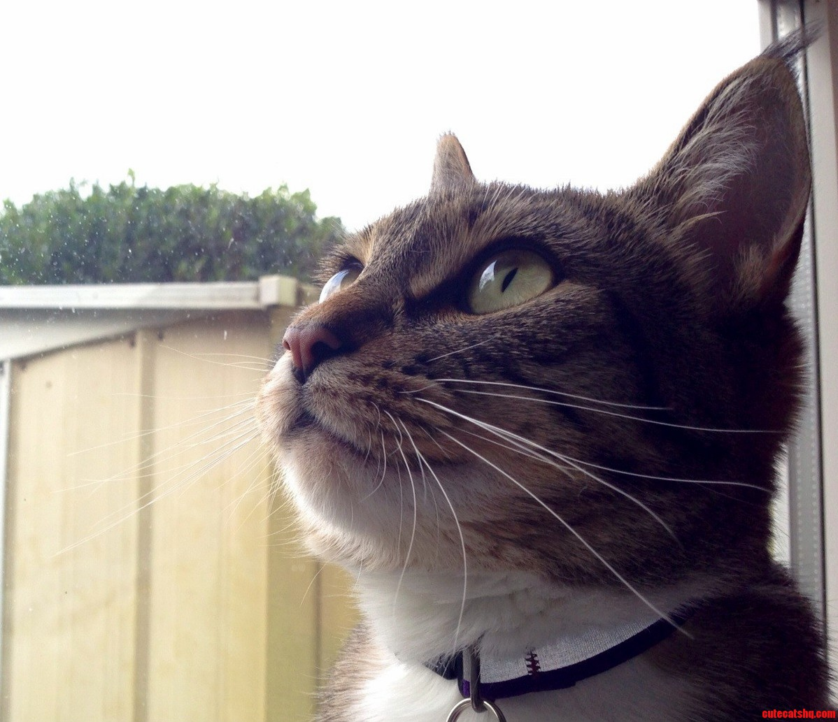 Day Dreaming About Outside