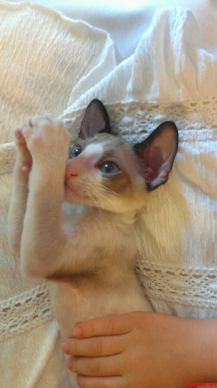 free cat pics