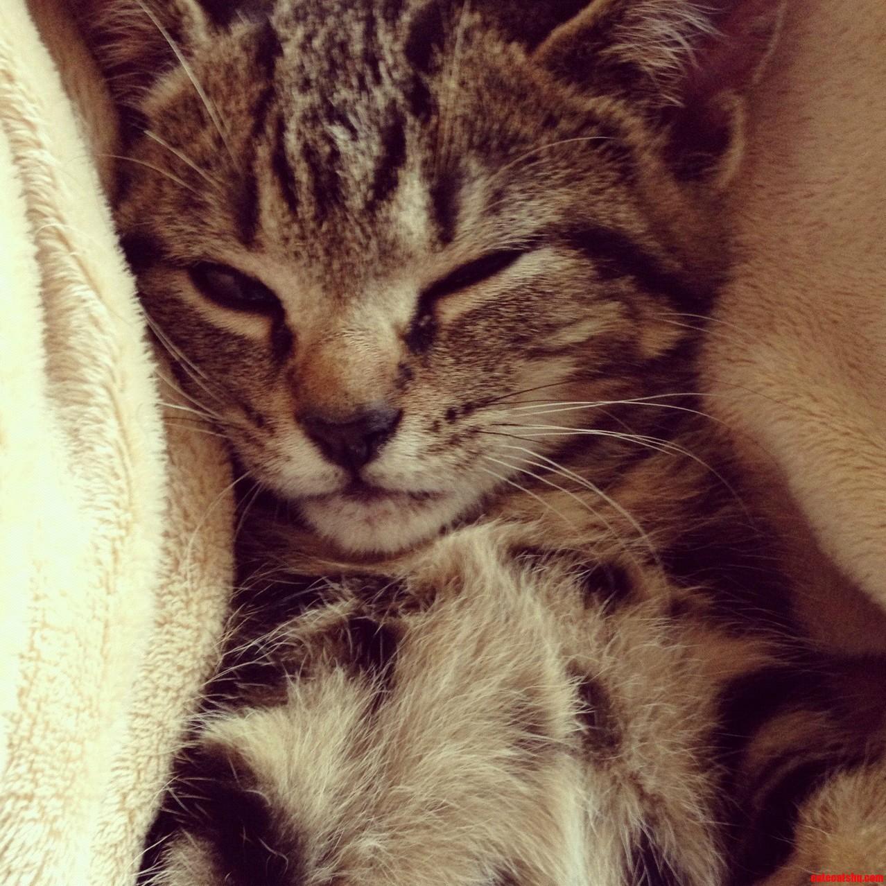 Dobby The Cat