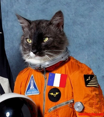Dont Know If It Belongs Here But… Astronaut Kitty