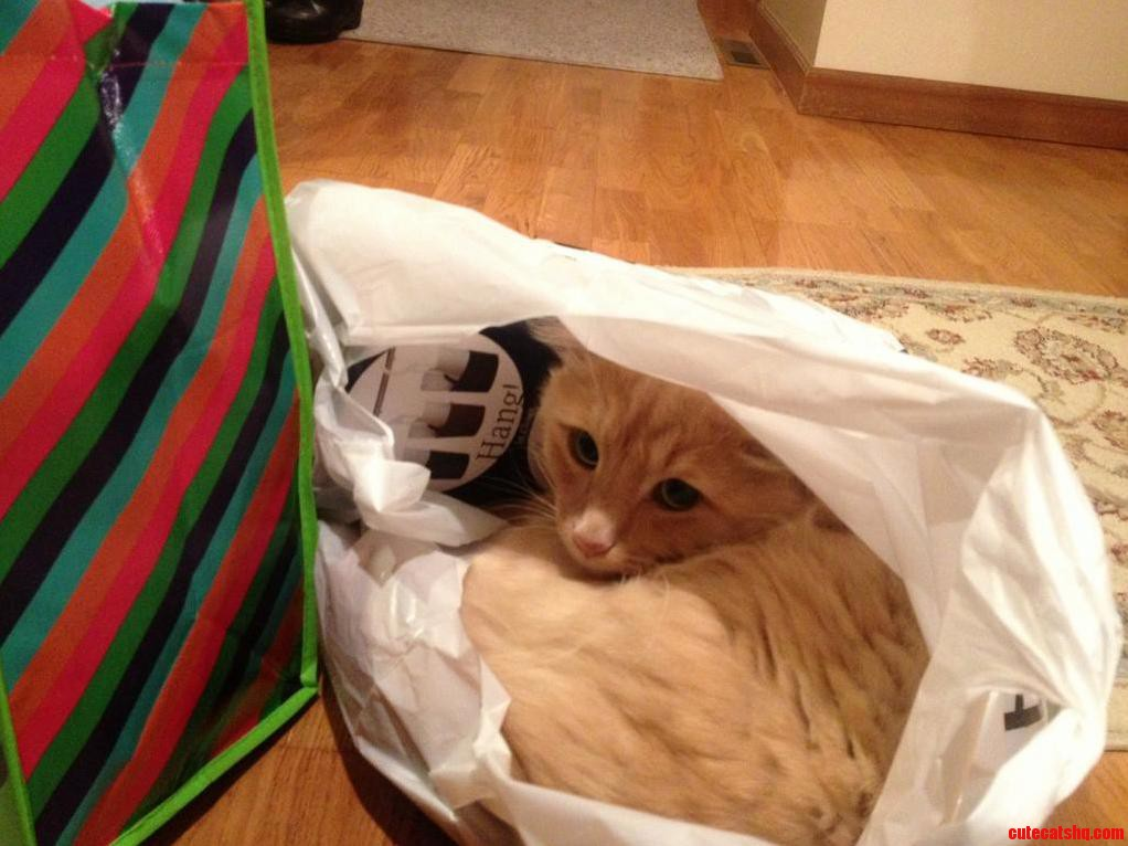 Dont Let The Cat Out Of The Bag