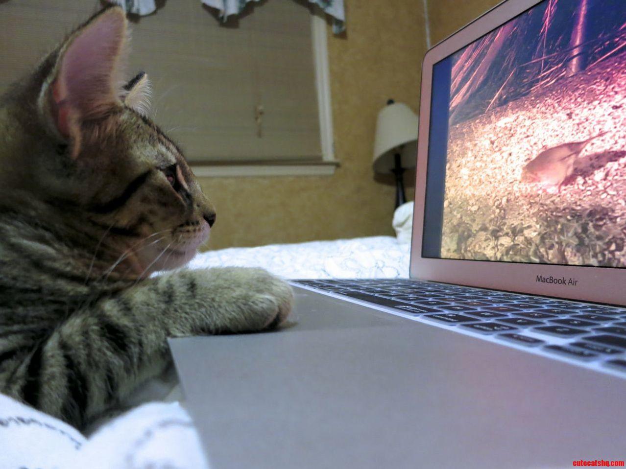 Dr. Tran Watches A Bird Video