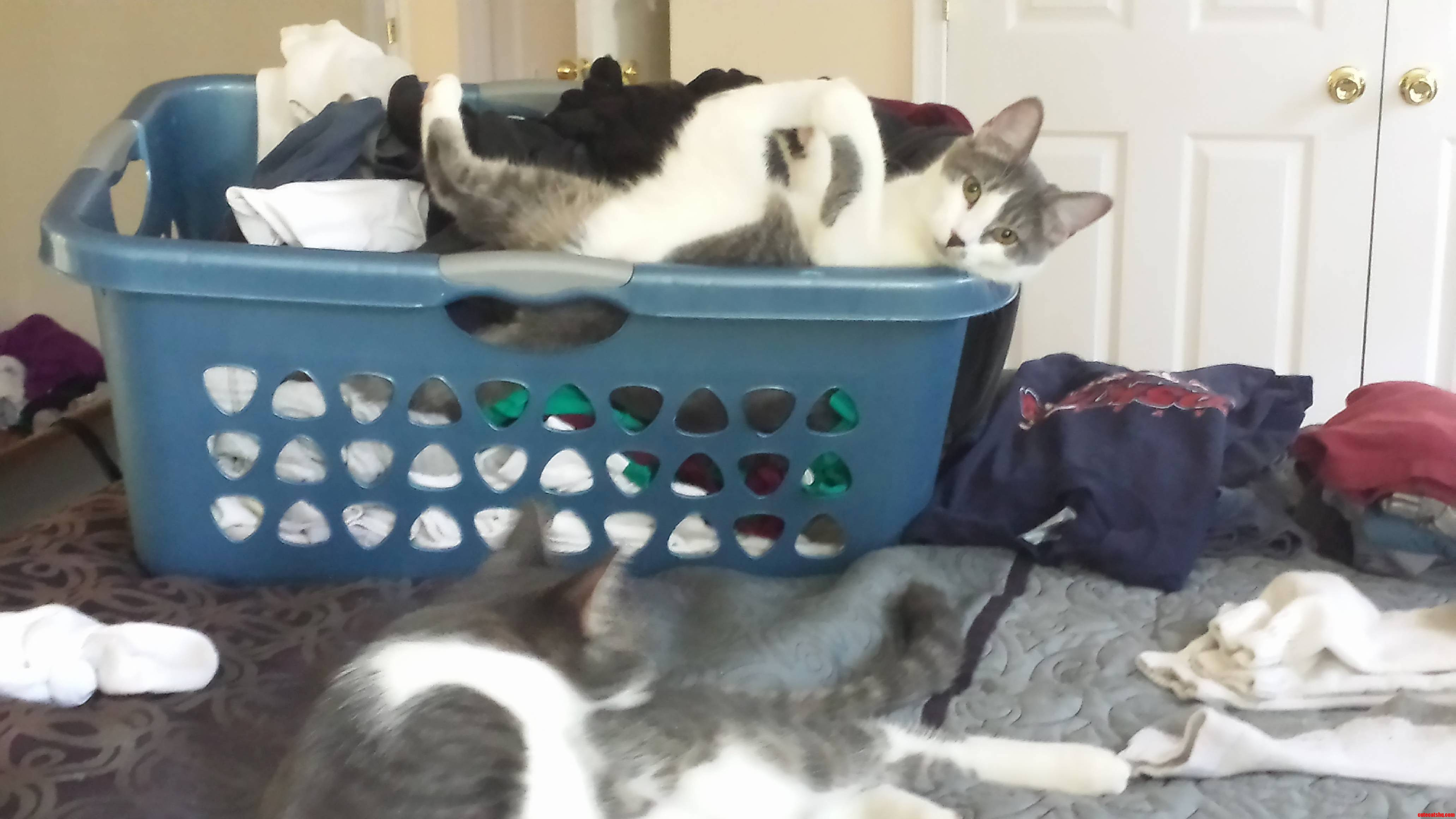 Every Time Clean Laundry Is Involved.