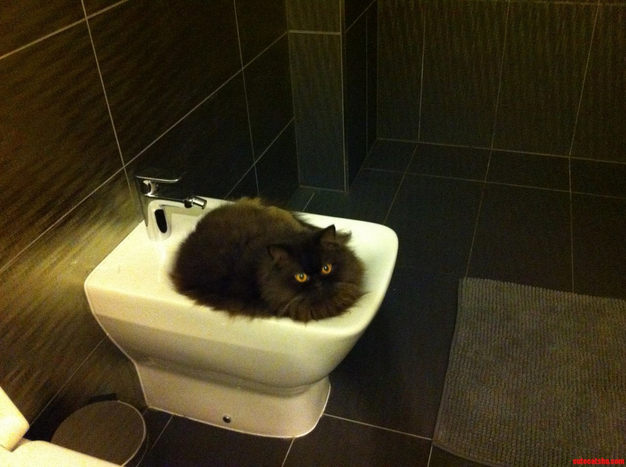 Favorite Cat Place In The Bathroom