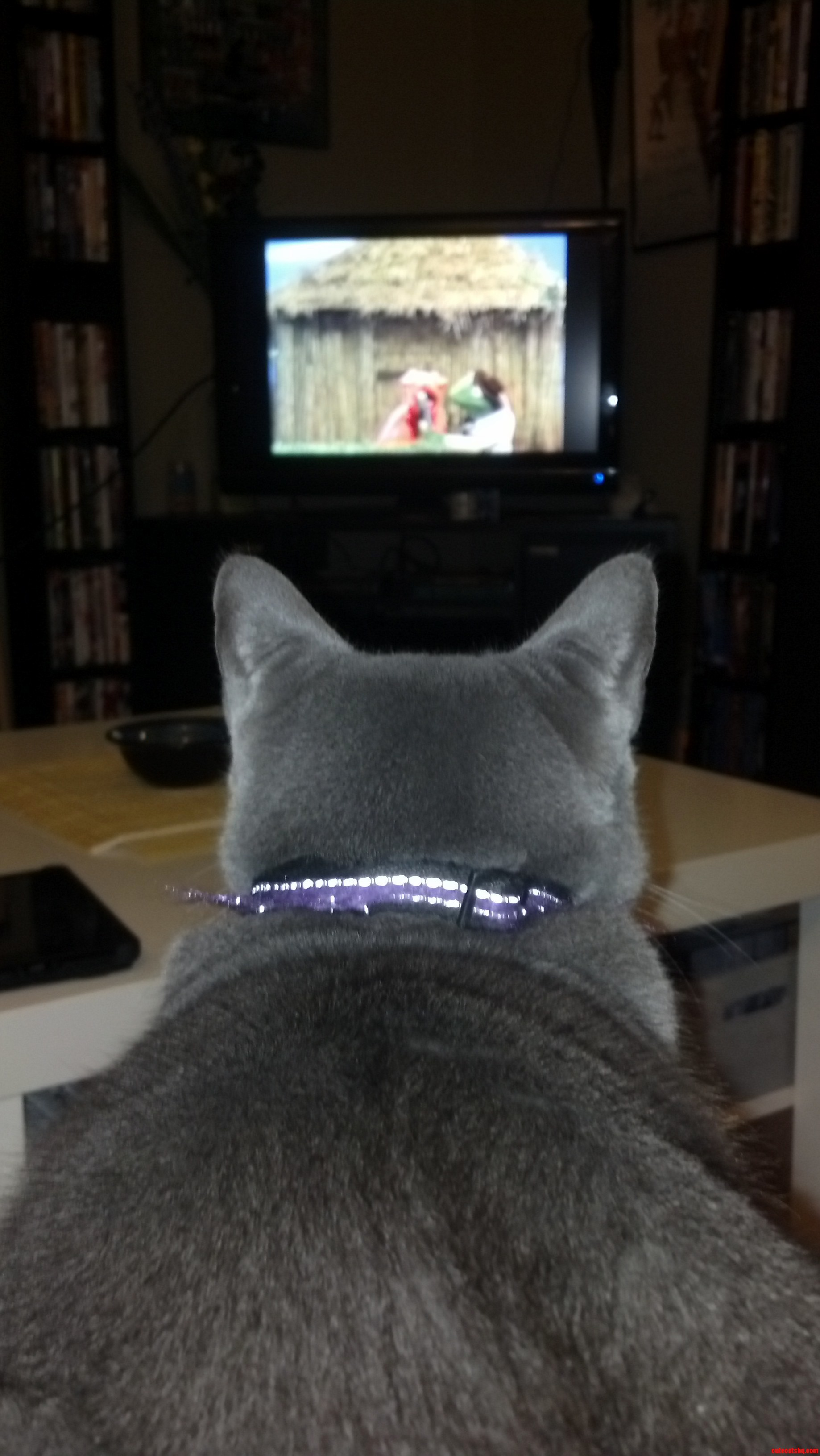 Felicity Watching Sesame Street