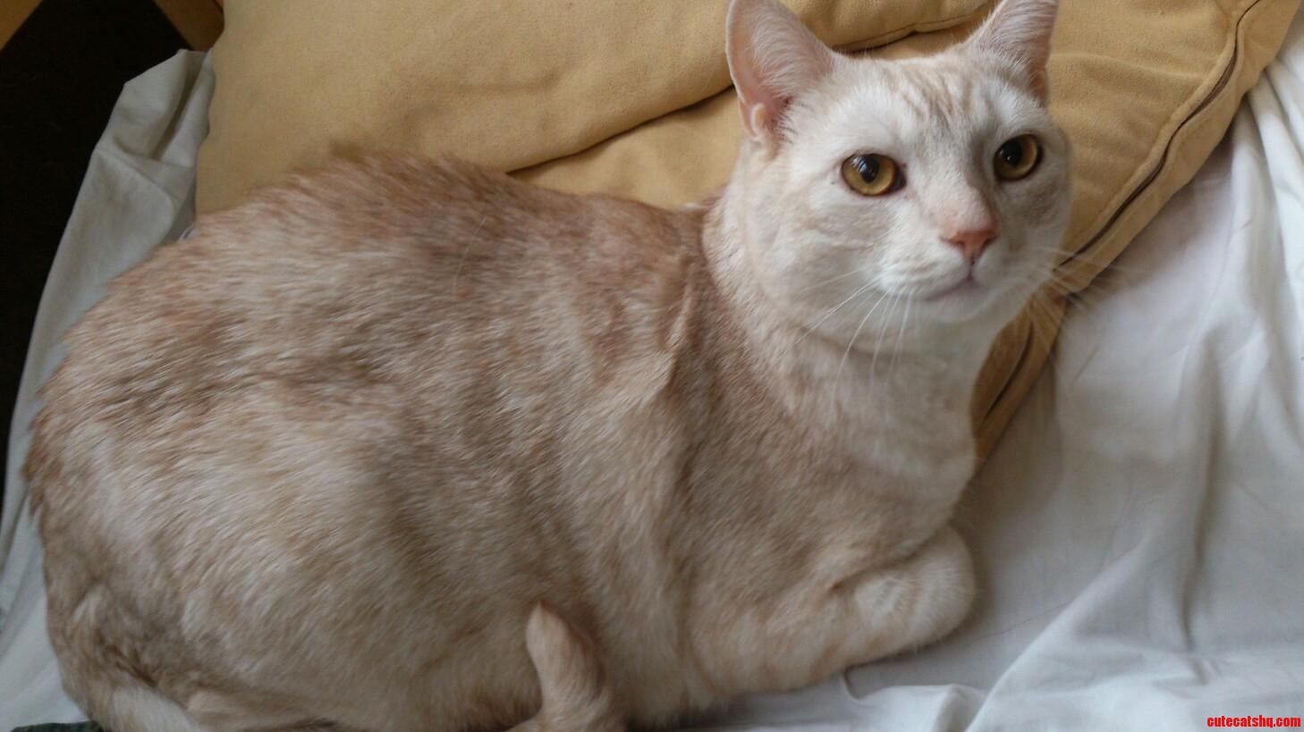 Friends Beautiful Cat Mr. Frost Gorgeous