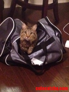 Frodo Wants To Go On Vacation Too