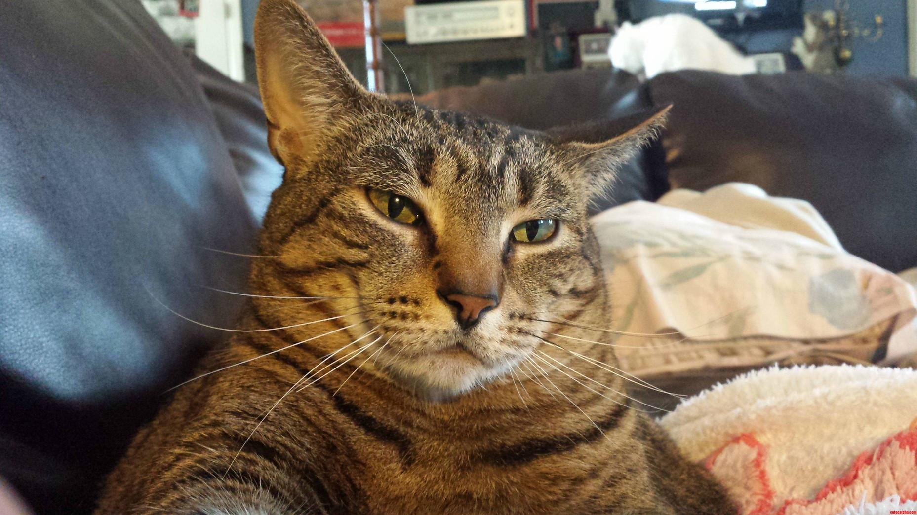 Girlfriends Fat Cat. Uber Relaxed.
