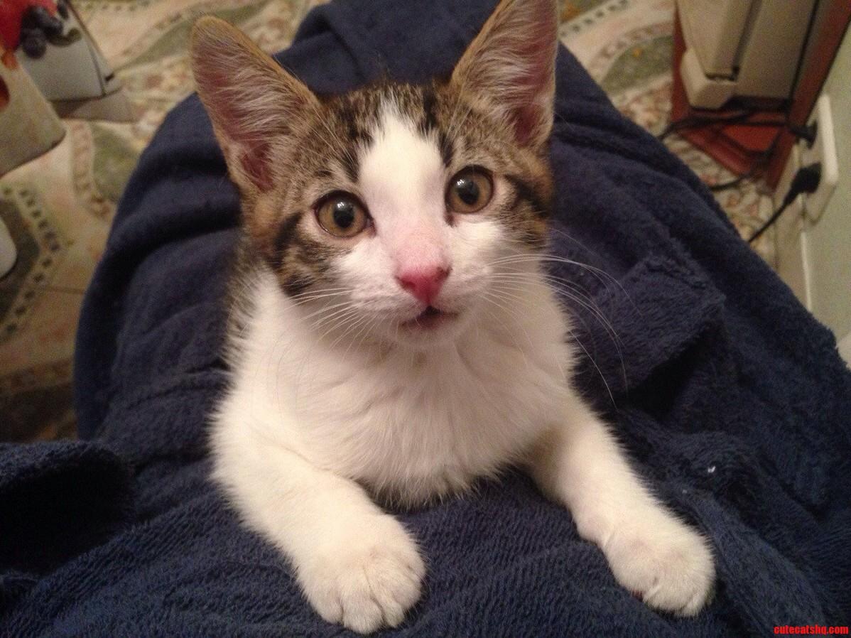 Got A Kitten A Week Ago.