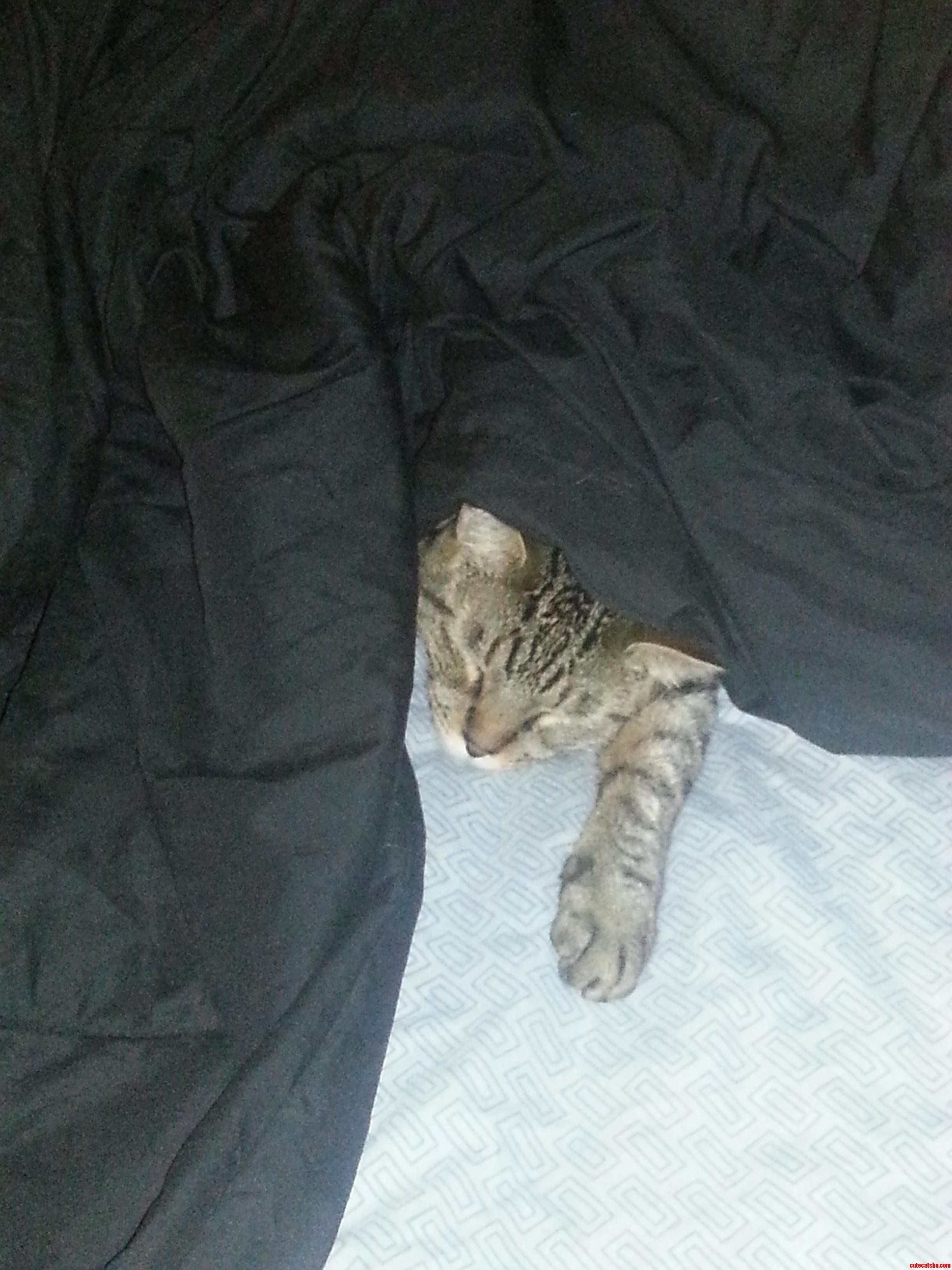 He Thinks No One Can See Him. My Big Scardey Cat Gizmo.