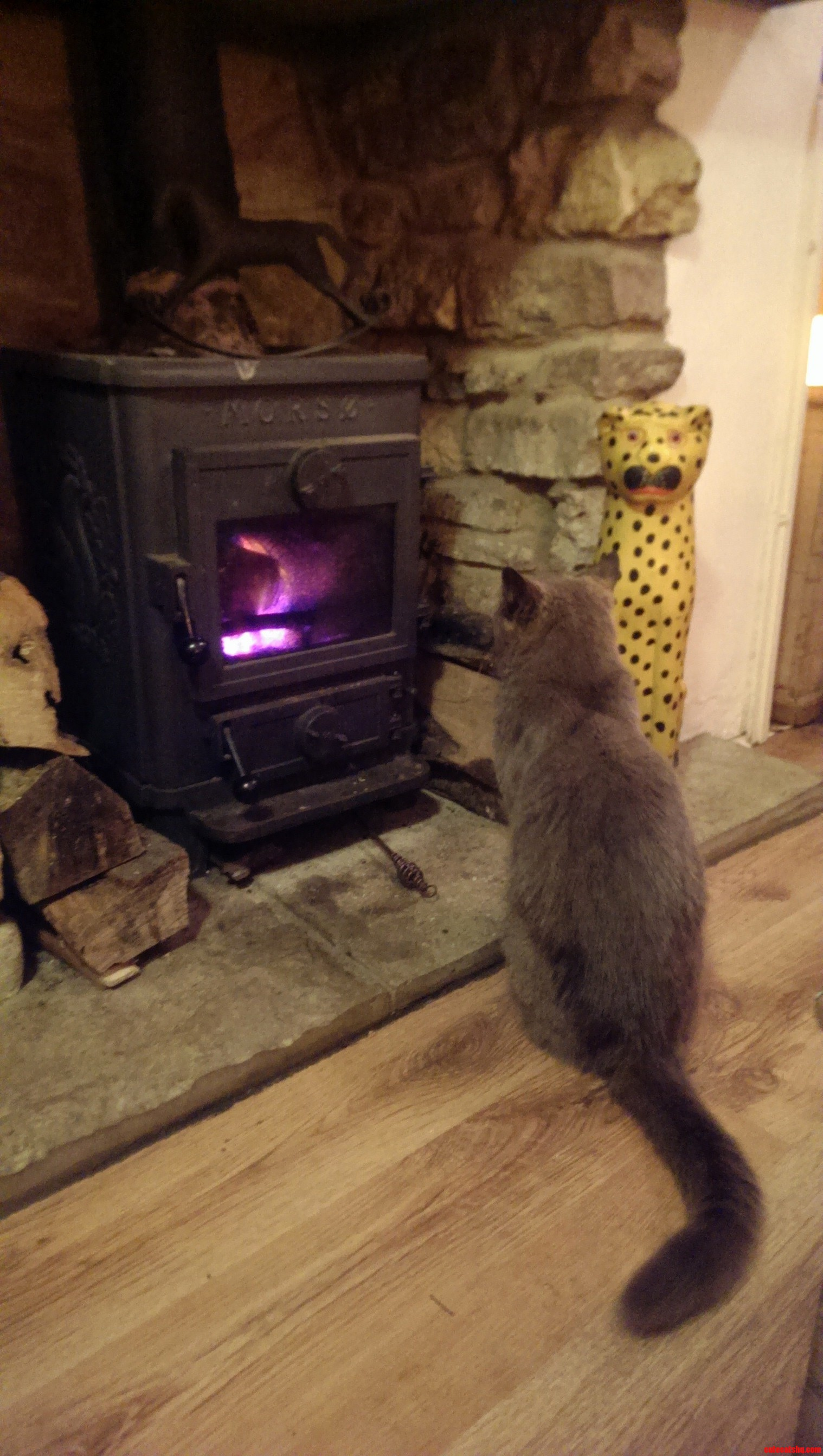 Henry The 13 Year Young British Blue Enjoying The Fire.