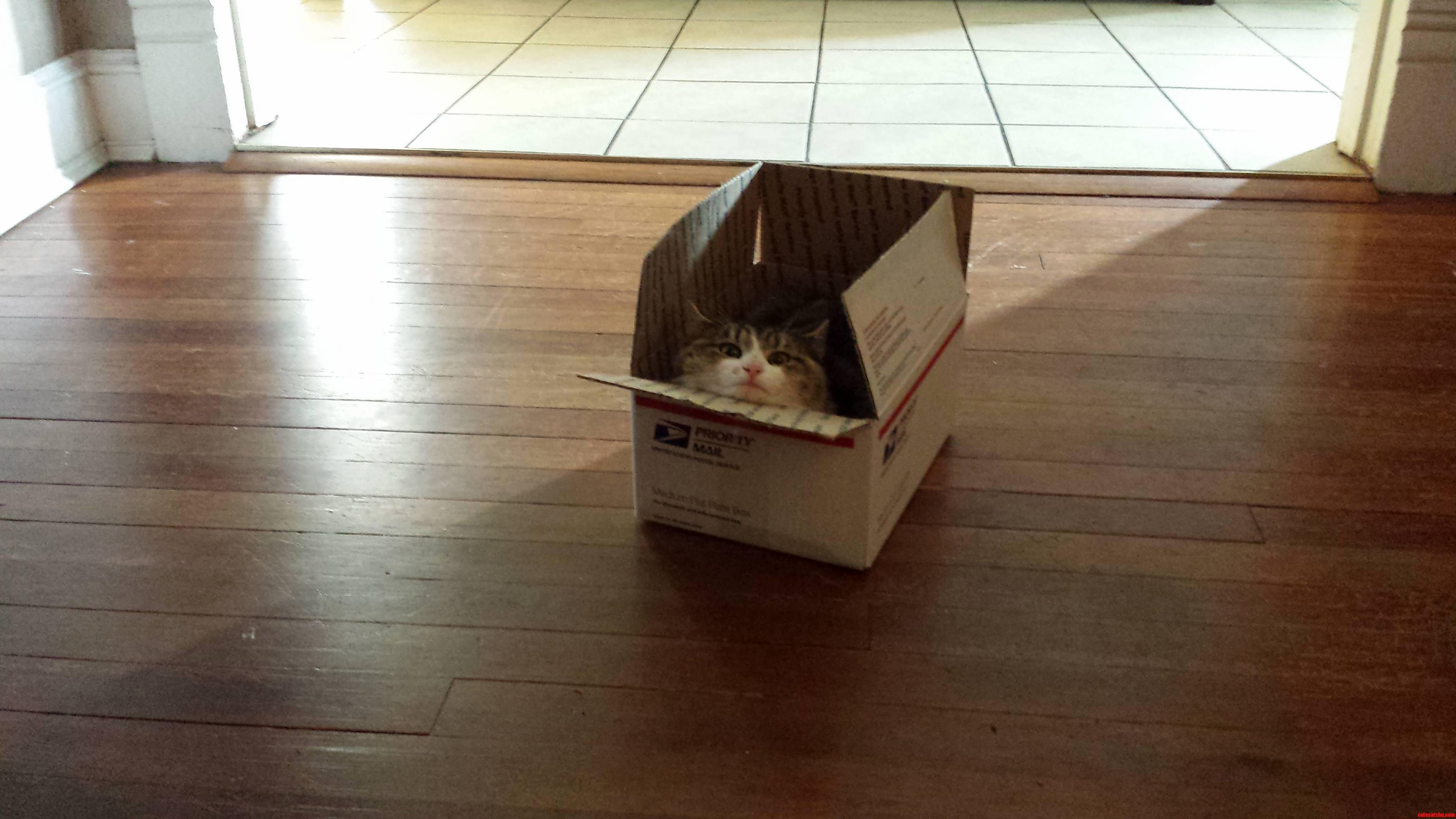 Her Box.