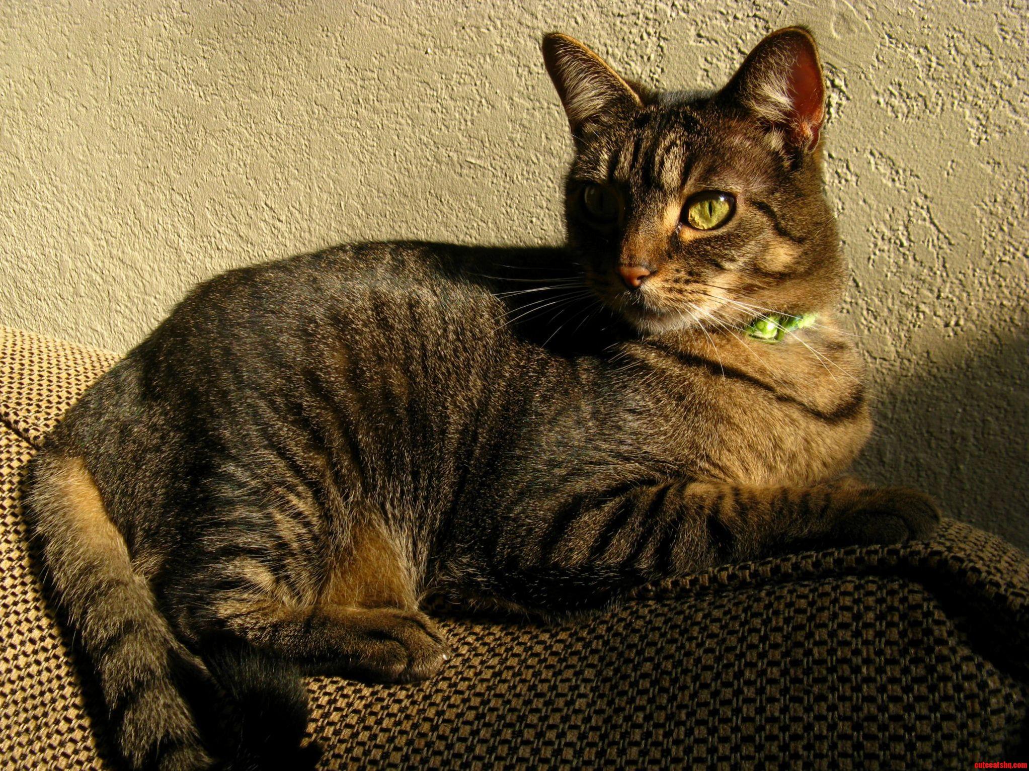 Heres My Beautiful Majestic Cat Janeway.