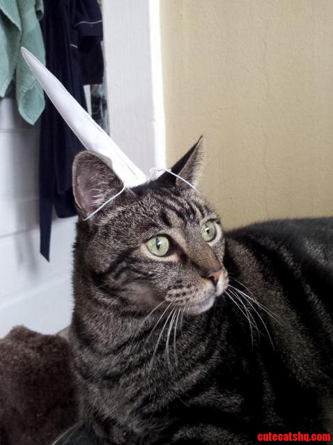 Heres My Cat Wearing A Unicorn Horn.